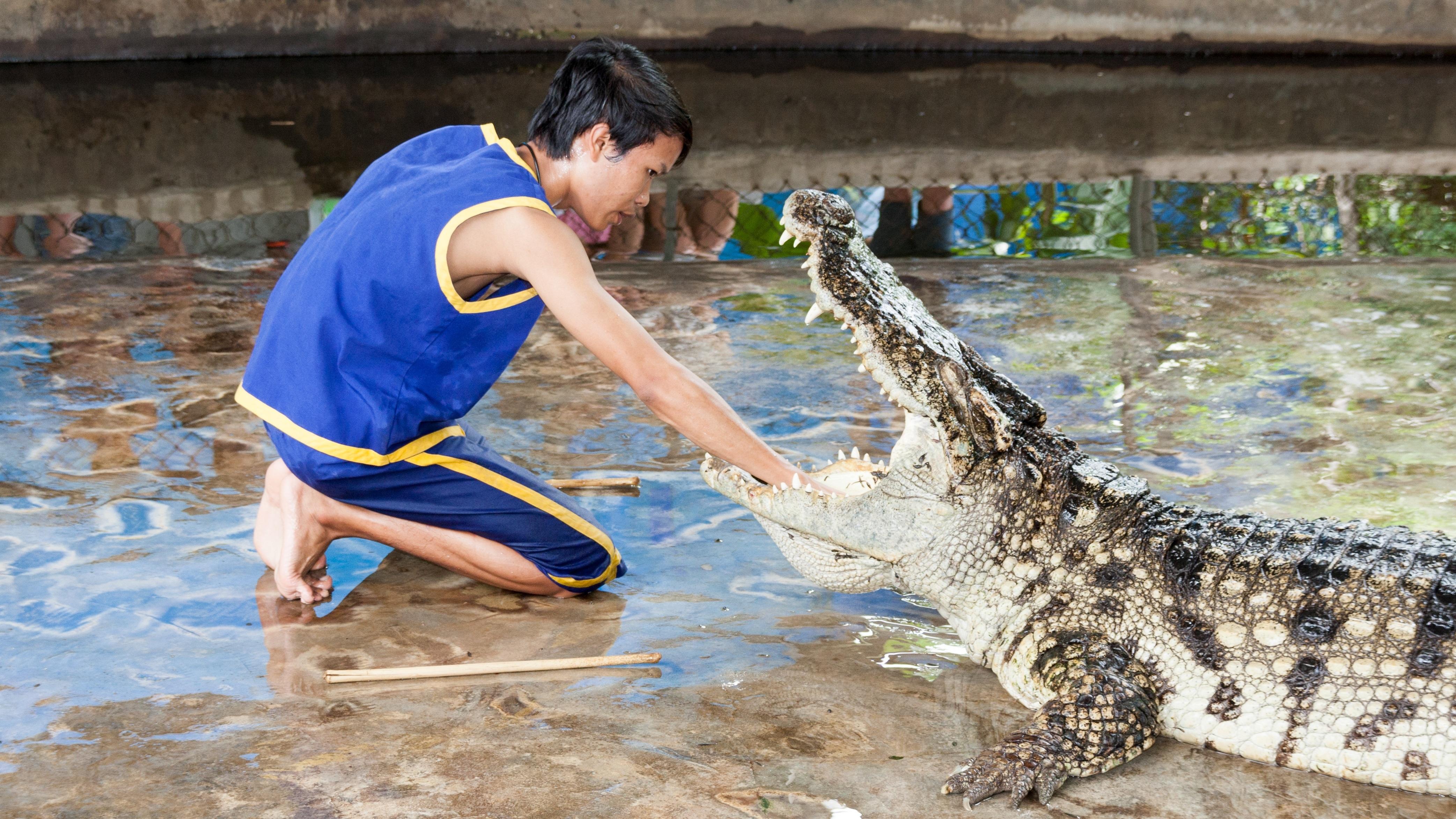 Free Images  Man, Show, Biology, Predator, Reptile, Fauna -5488