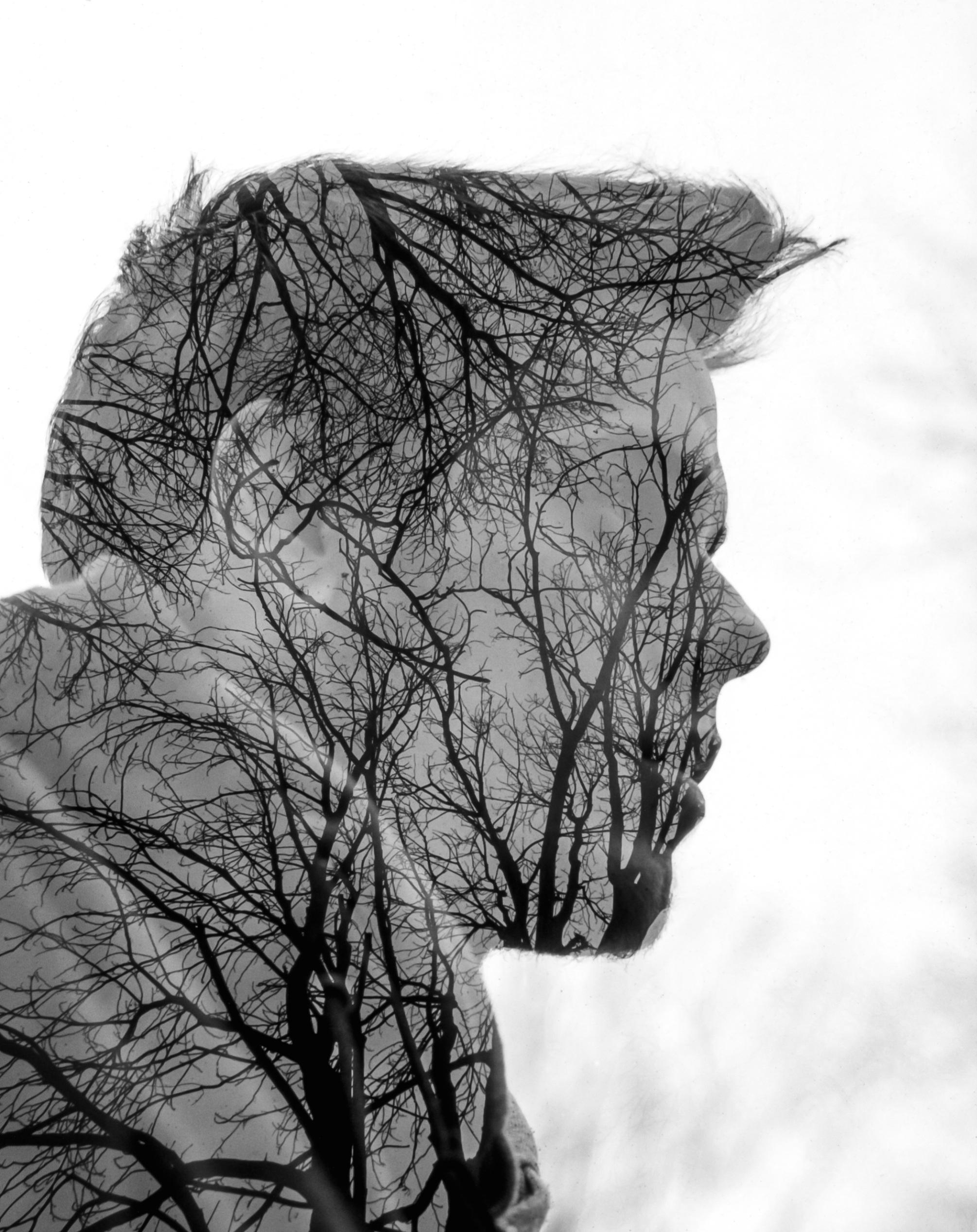 картинки дерево личности отличие тюменских разработчиков