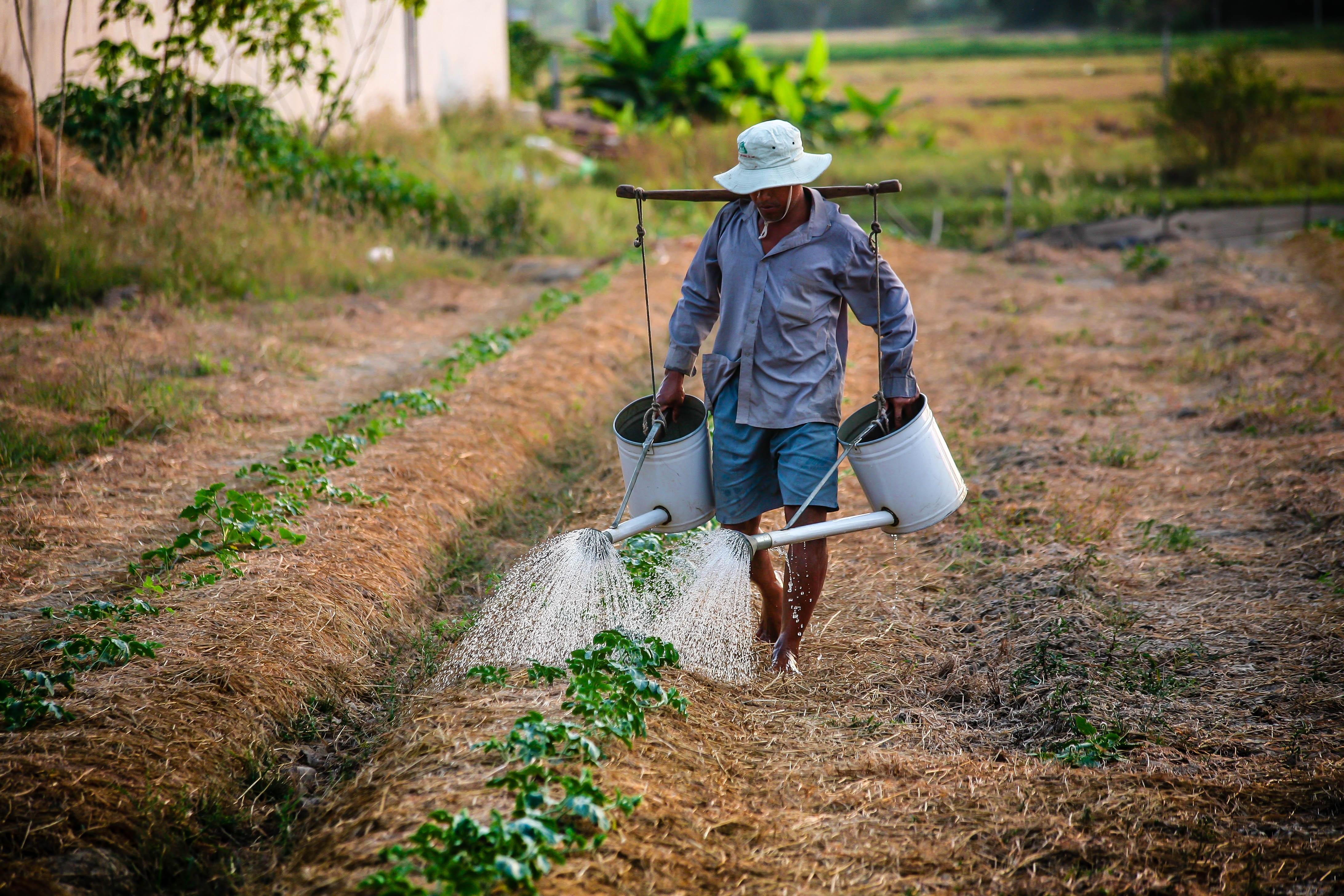 c1c060ff4 hombre árbol bosque césped para caminar sendero campo granja campo rural  suelo agricultura agricultor obrero plantación