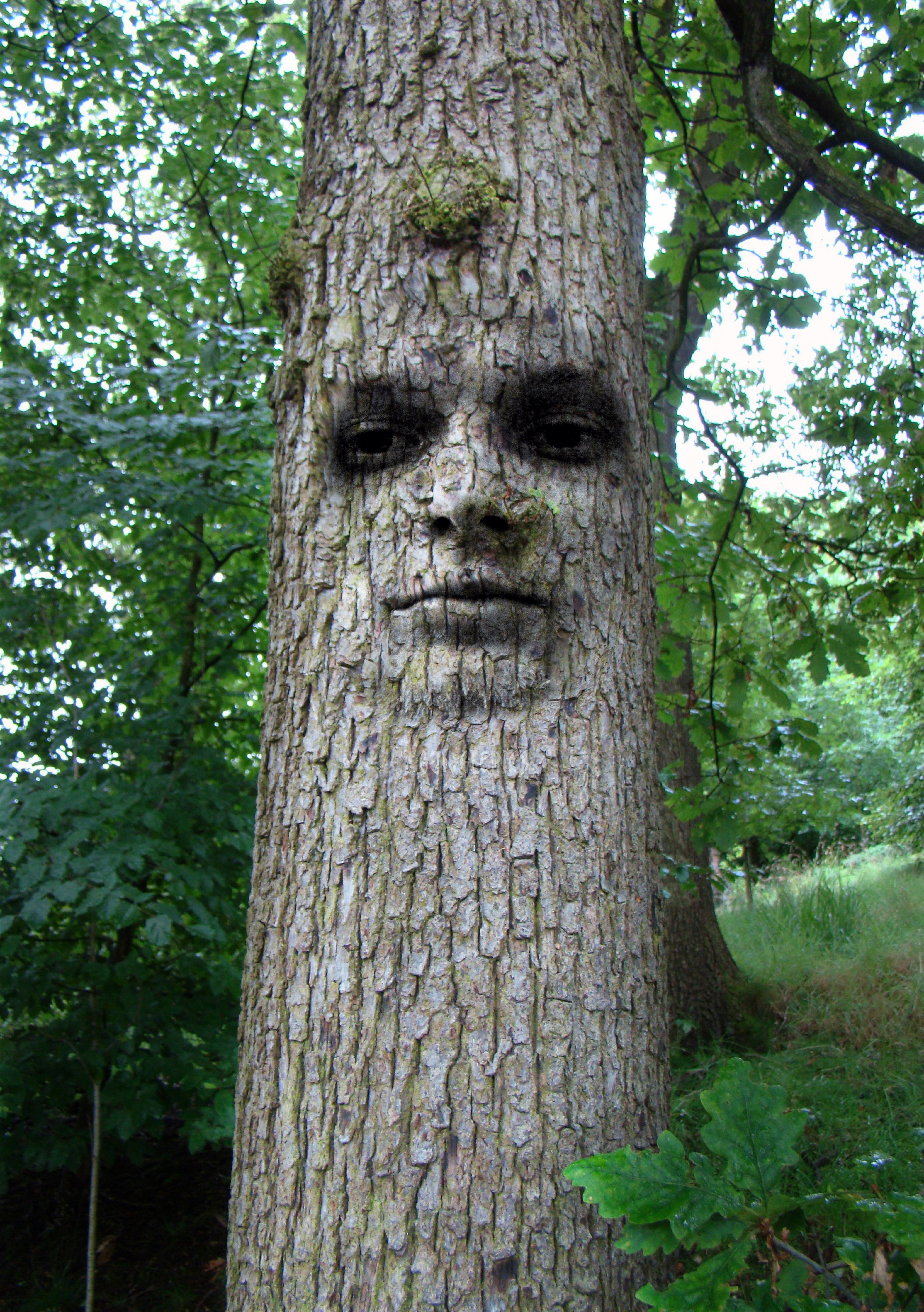 Birch Tree Trunk Decor