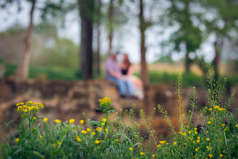 ny skog dating