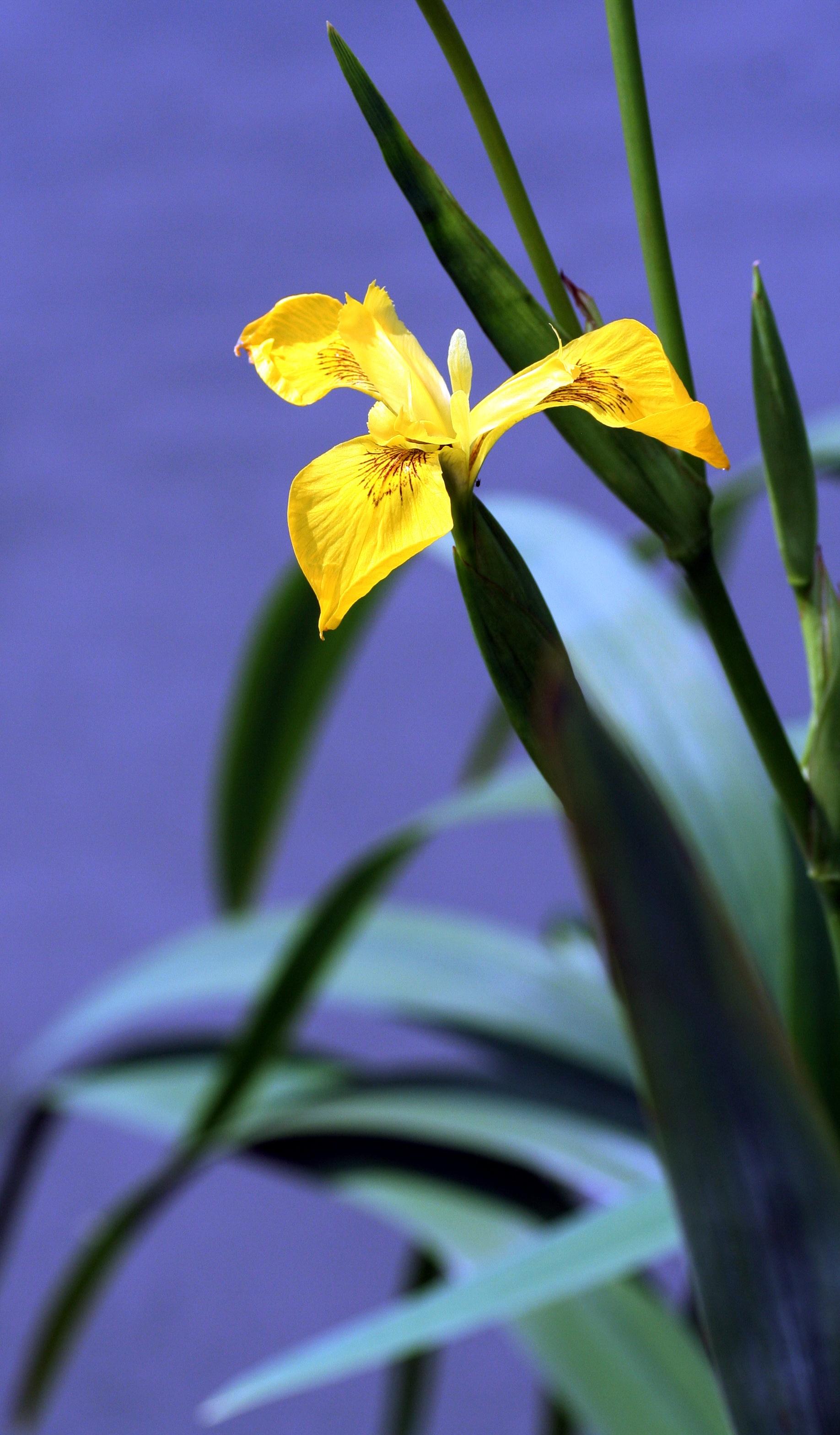 Free Images Marsh Leaf Petal River Botany Flora Yellow