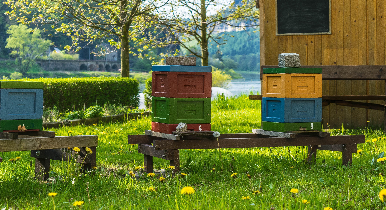 kostenlose foto wiese l wenzahn honig fr hling farbe bunt wirbellos blumen imker. Black Bedroom Furniture Sets. Home Design Ideas