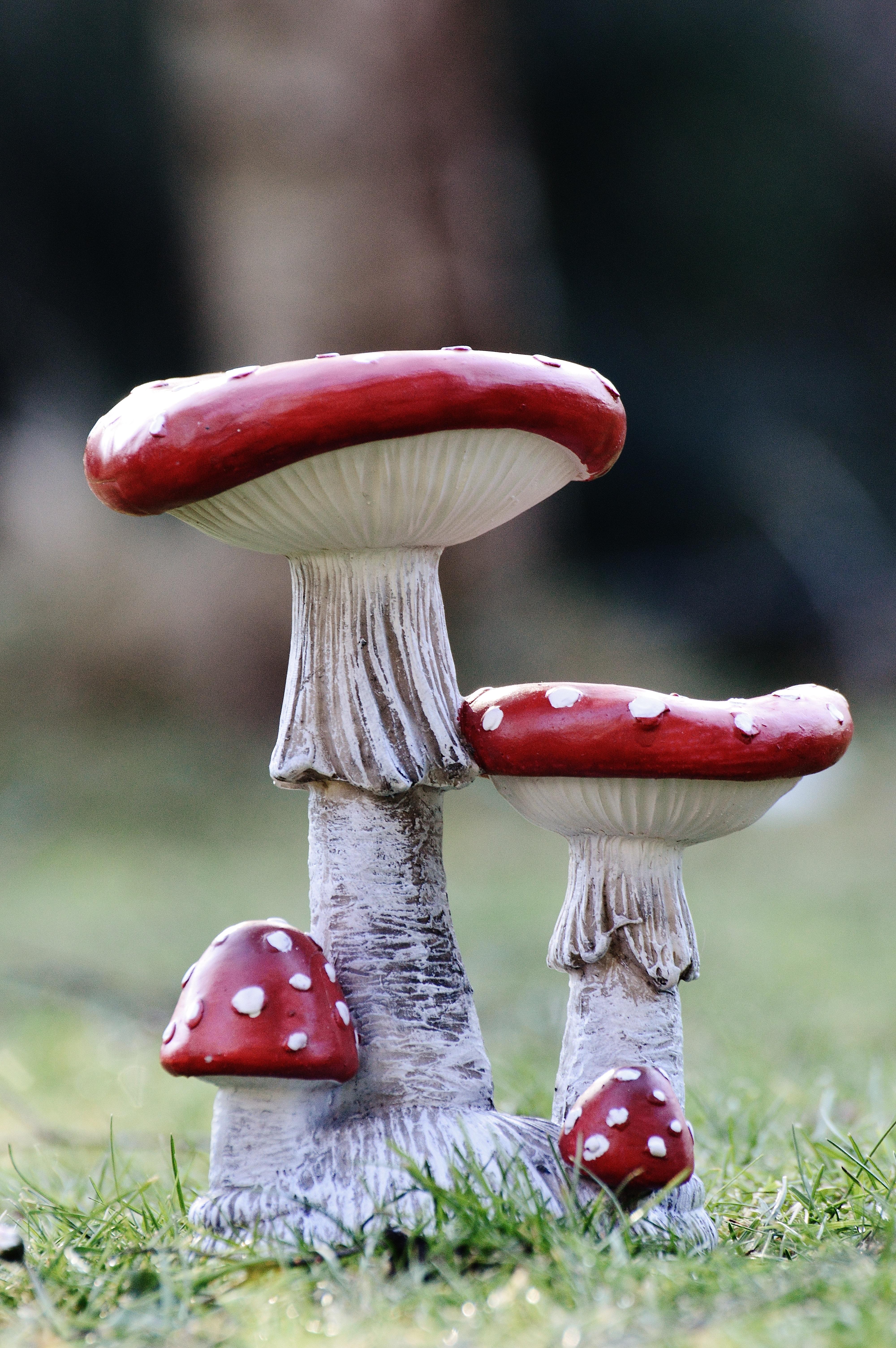 Images Gratuites : Prairie, décoration, rouge, champignon, jardin ...