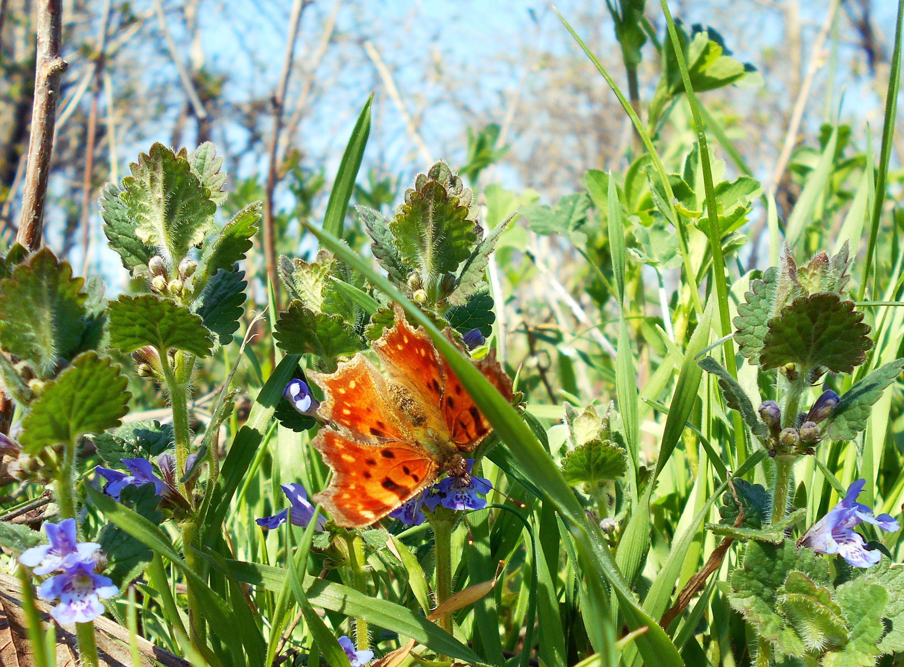 Картинка луг с цветами и насекомыми