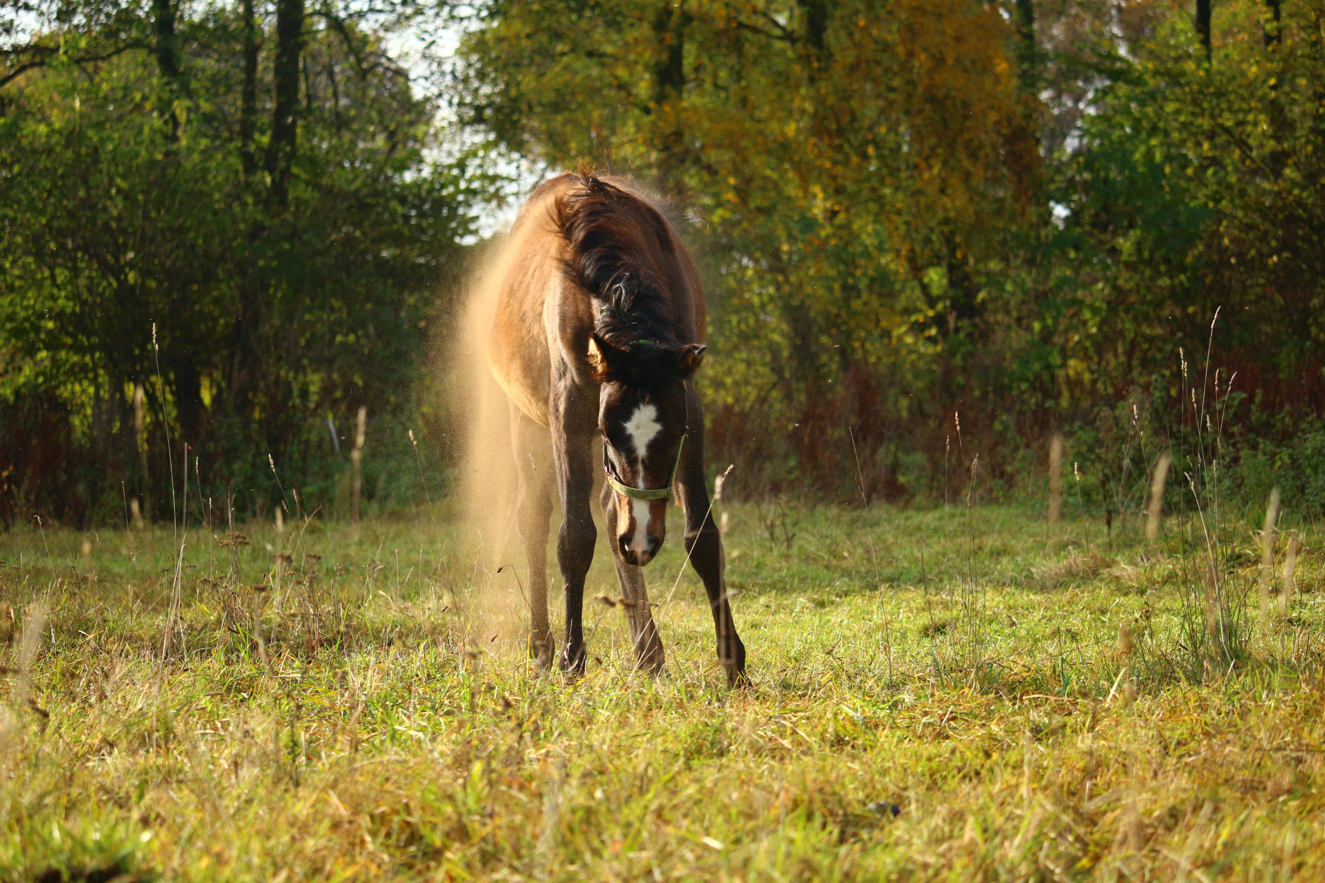 poney roulant