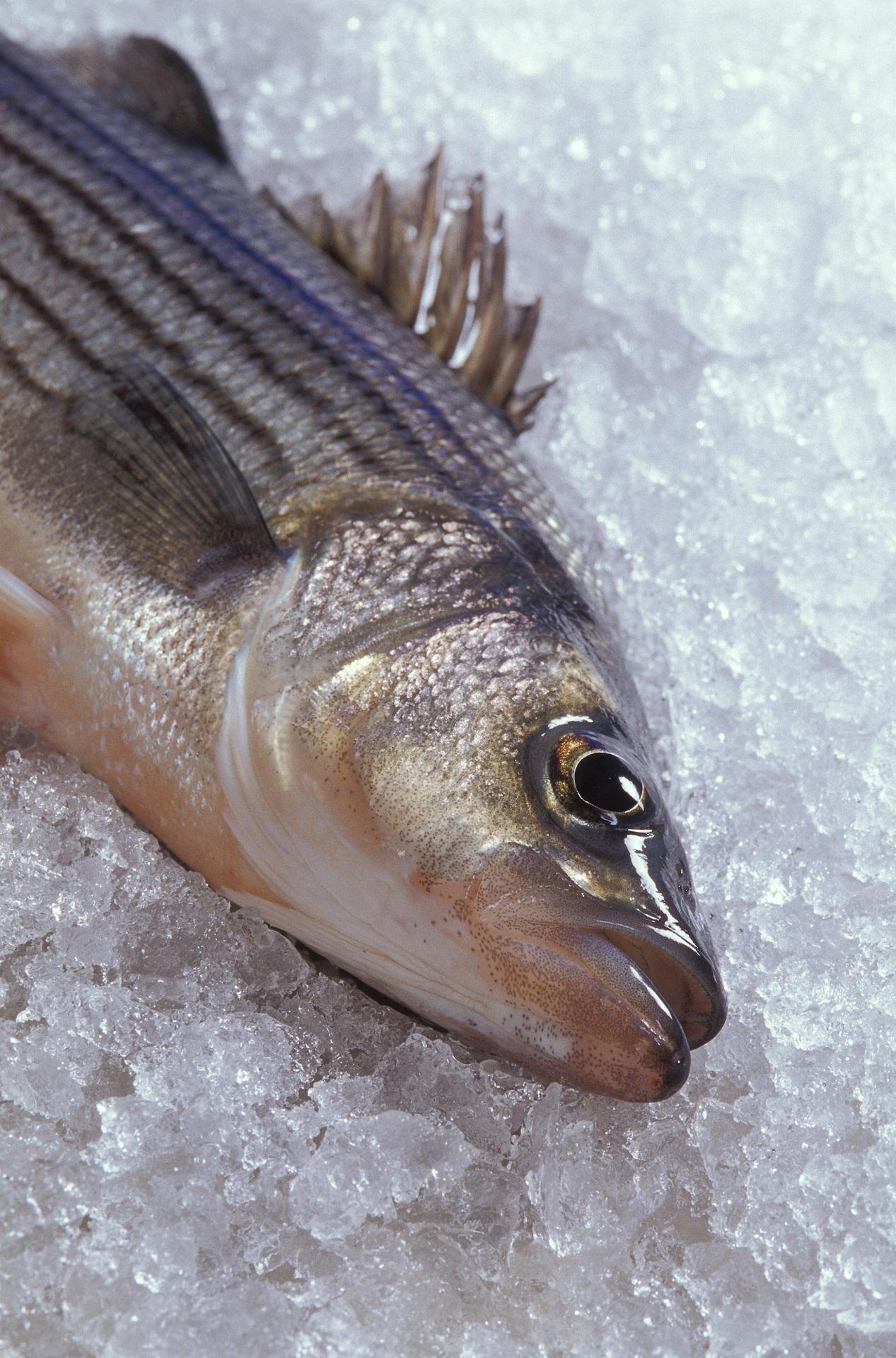 Стейк рыбы пищевой сырые нерка кусок морепродукты срез диета.