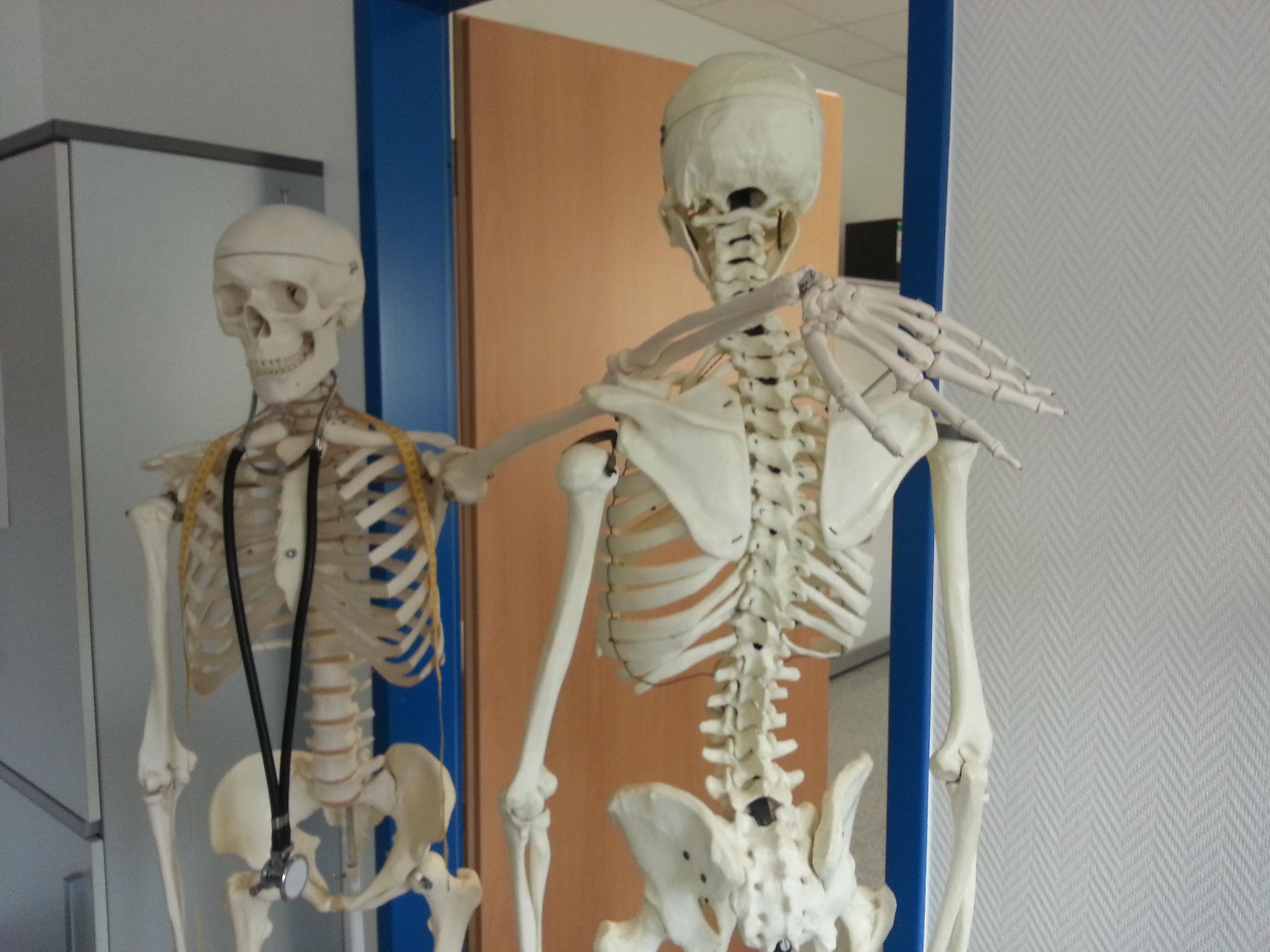 Free Images Model Art Hospital Skeleton Anatomy Doctor