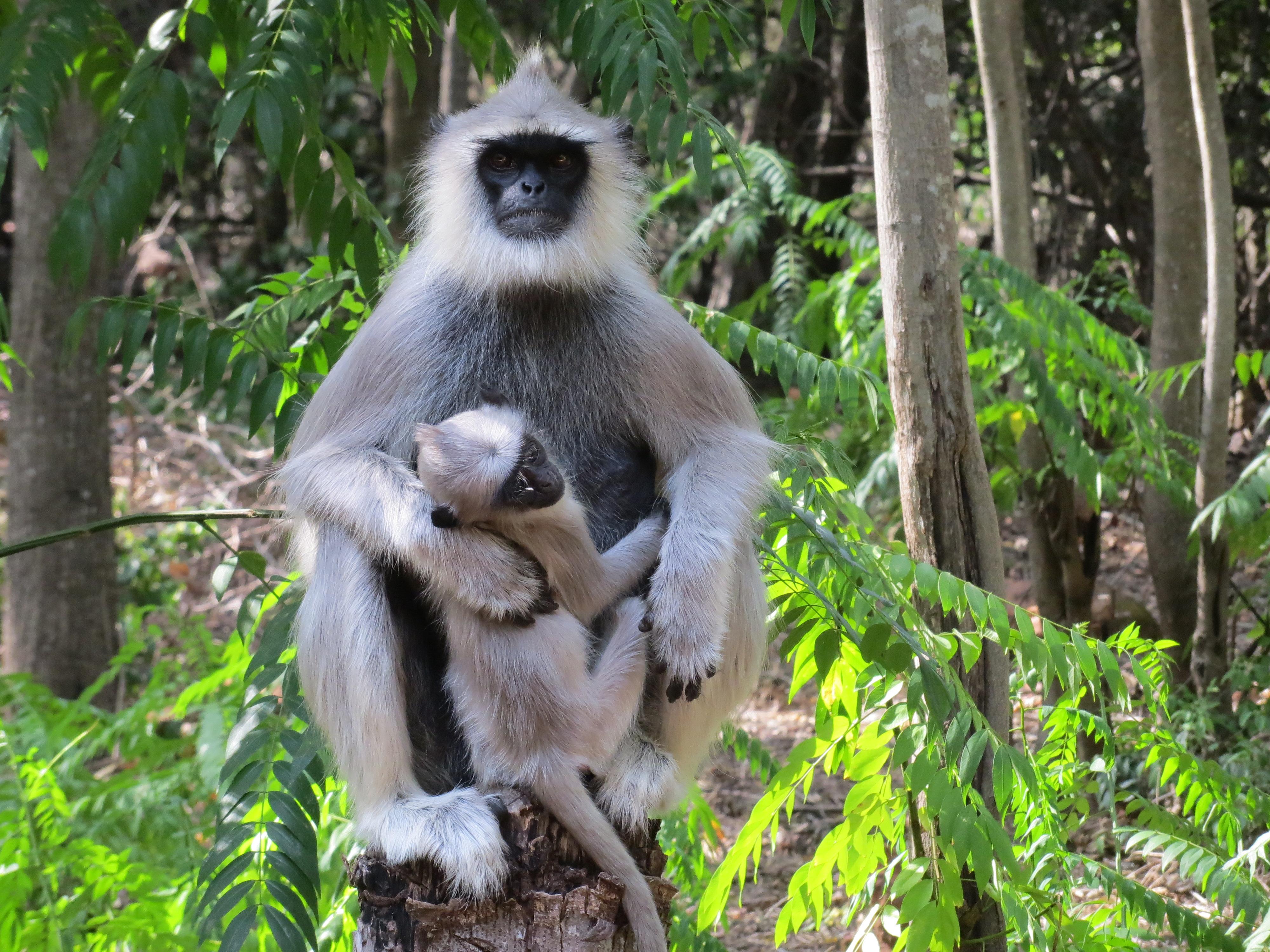 Gambar Anak Anak Fauna Binatang Menyusui Uskup Agung