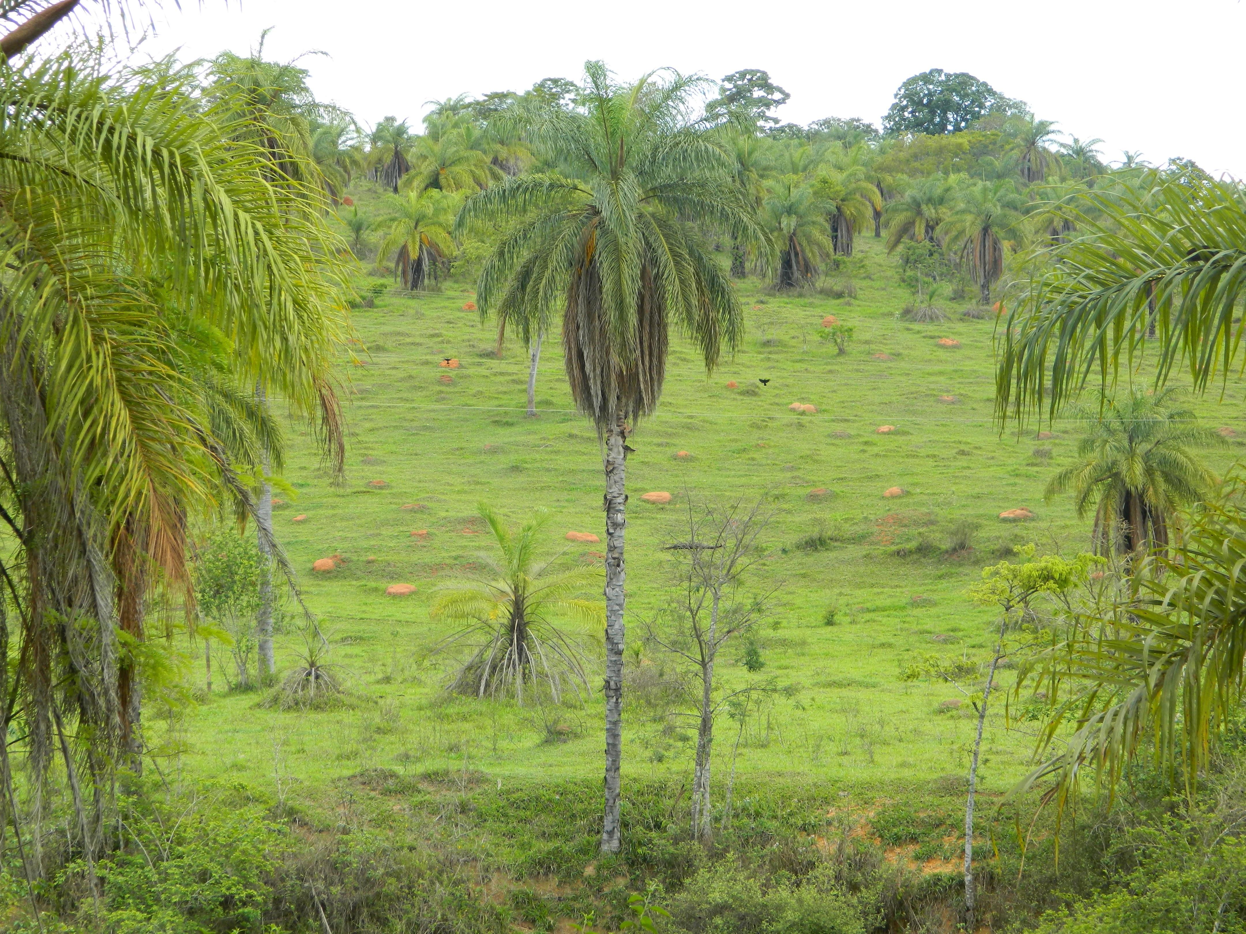 free images   montanha  vegetation  ecosystem  nature