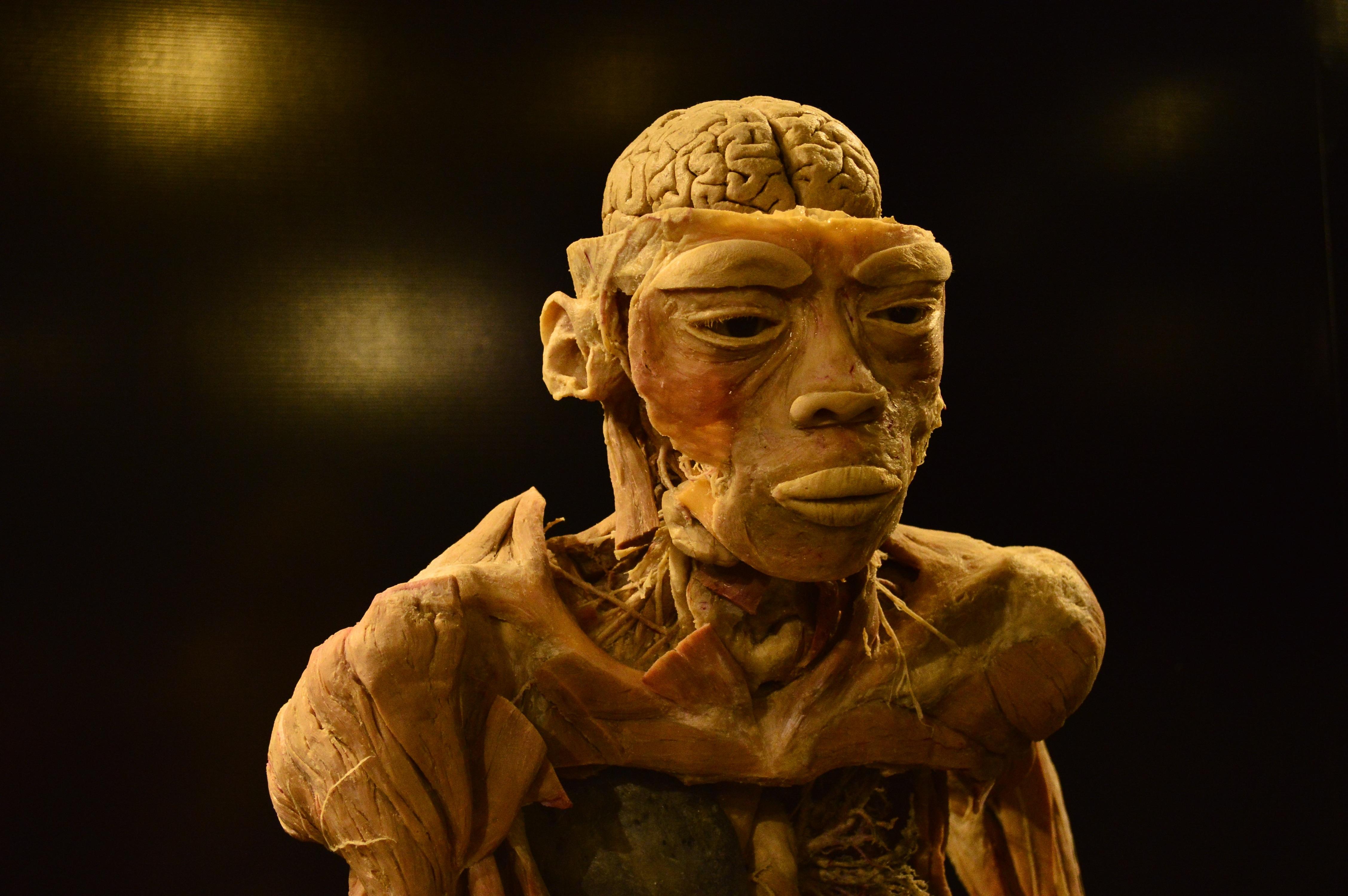 Fotos gratis : Monumento, estatua, cuerpo humano, escultura, art ...