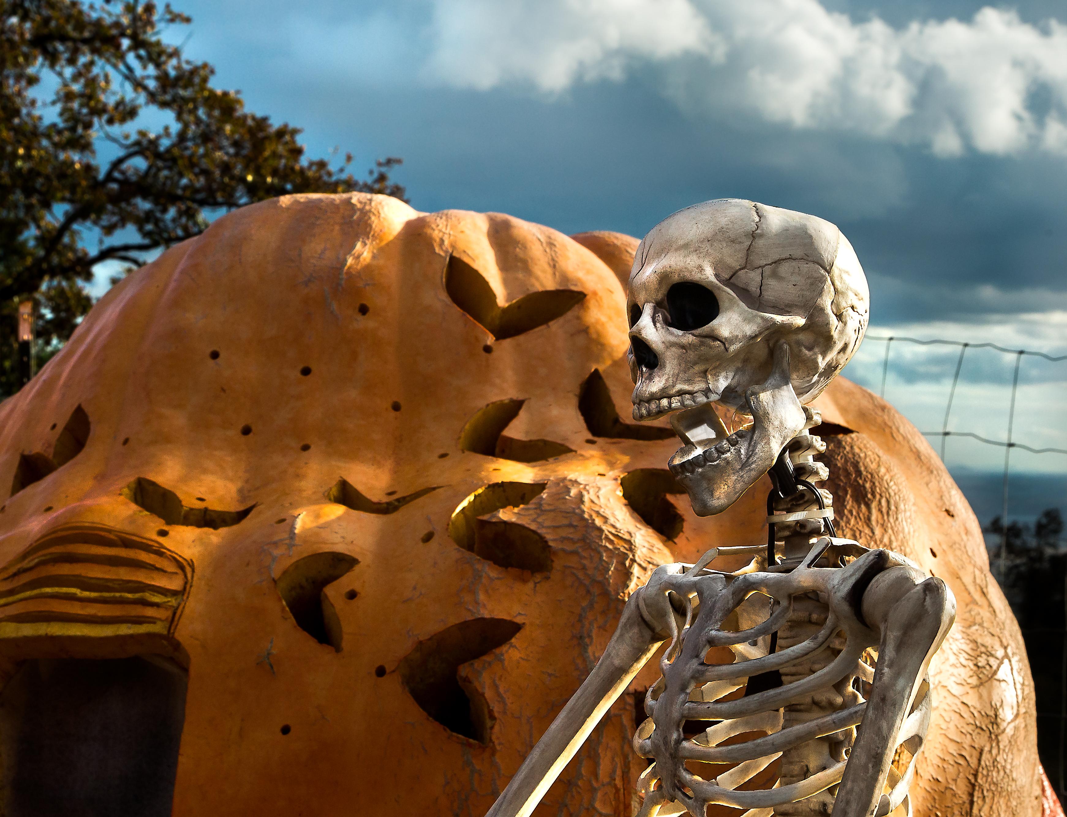 Скелет фото картинка