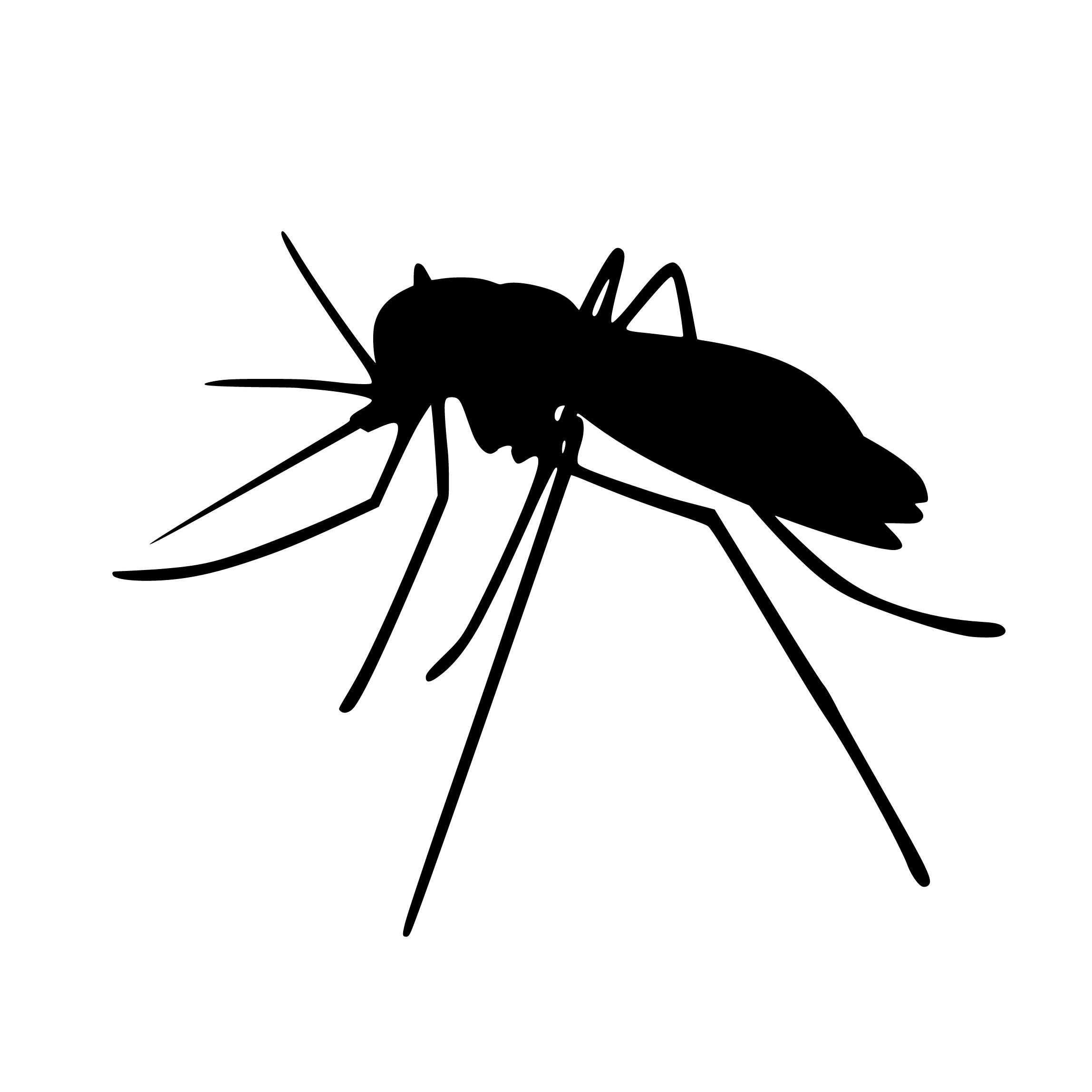 Immagini Belle Zanzara Insetti Silhouette Aedes