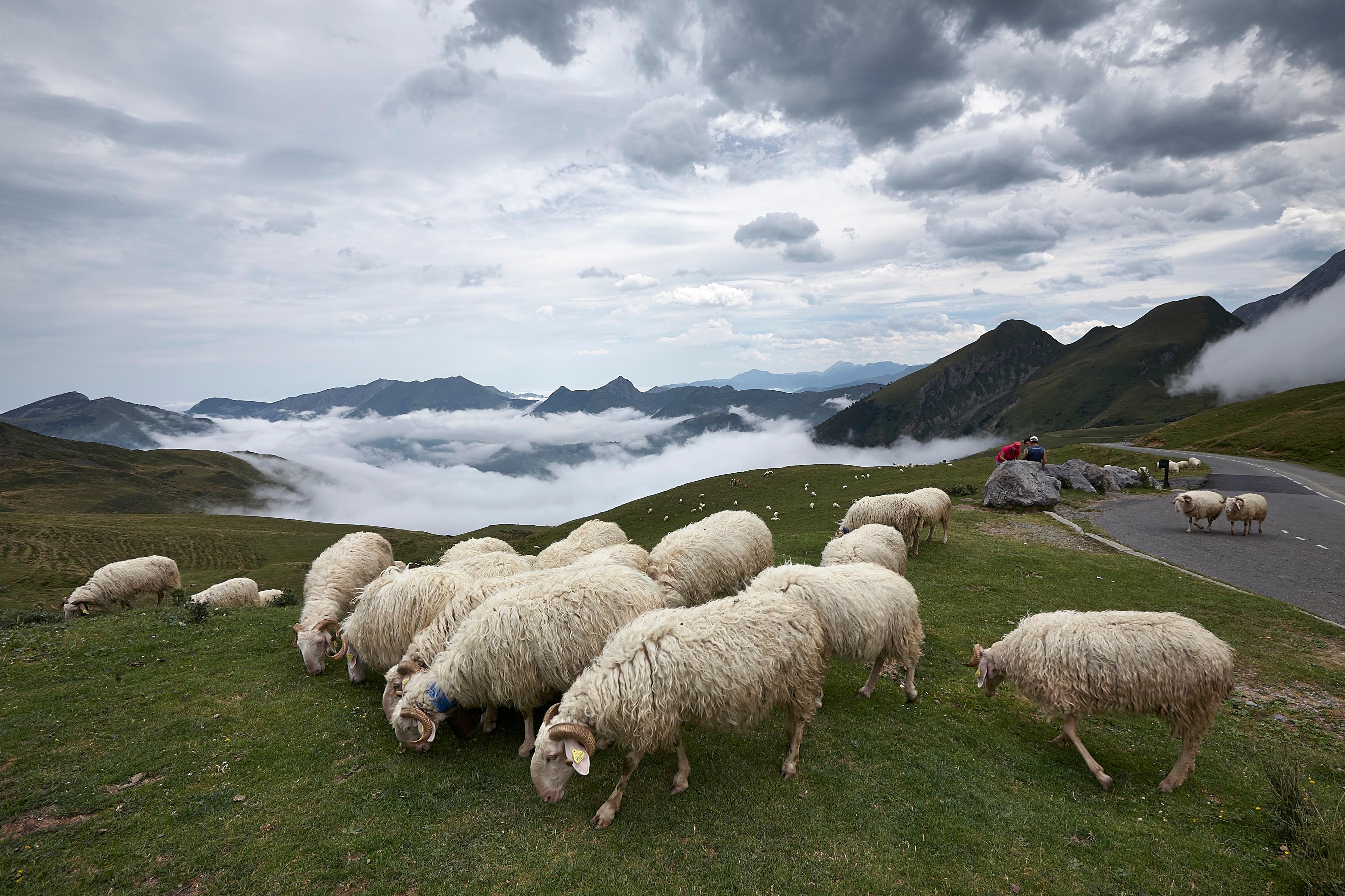 нашем каталоге фотографии баранов на фоне гор уже разобрались, что
