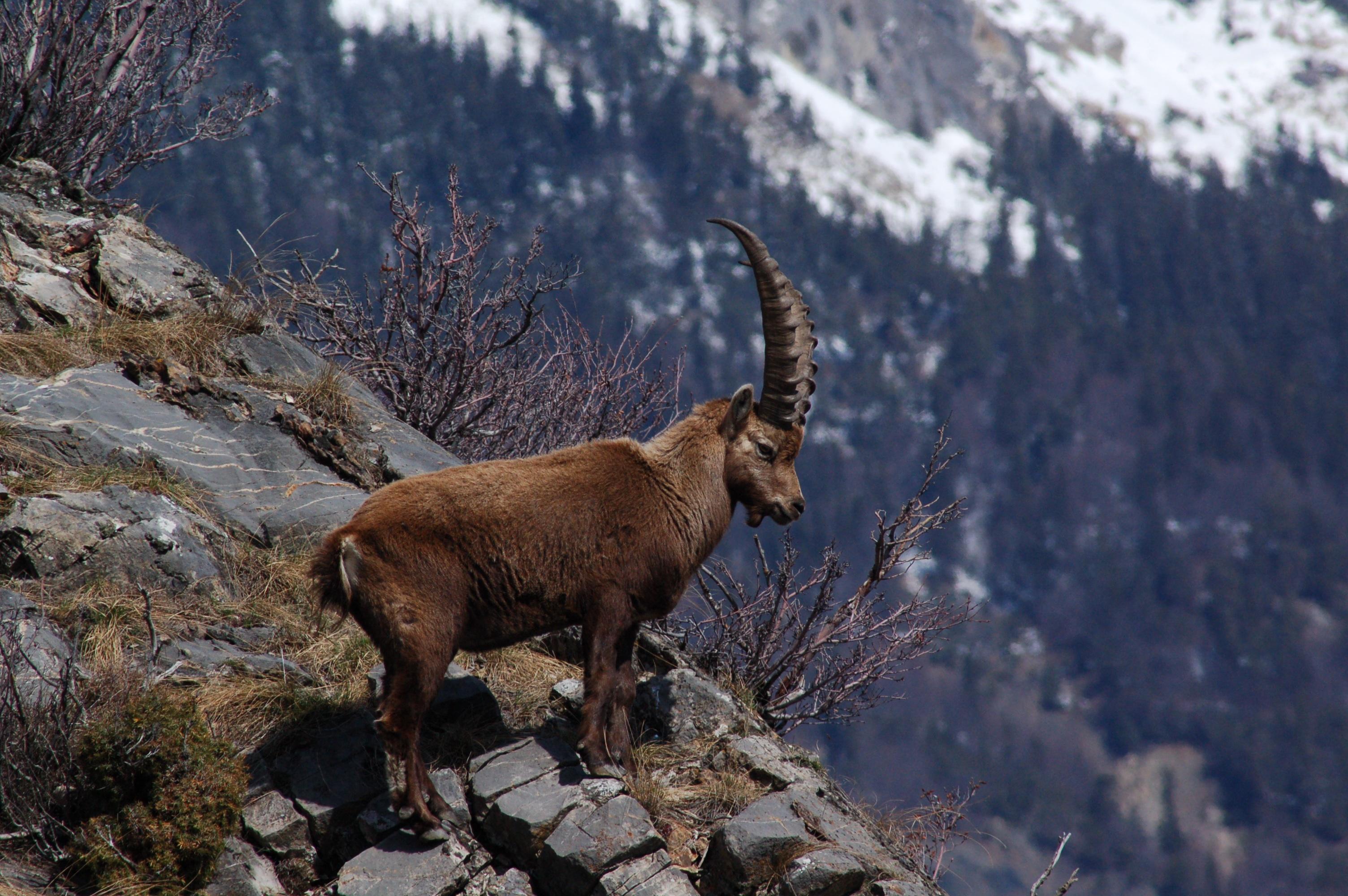 животный мир гор фото владелец считает, что