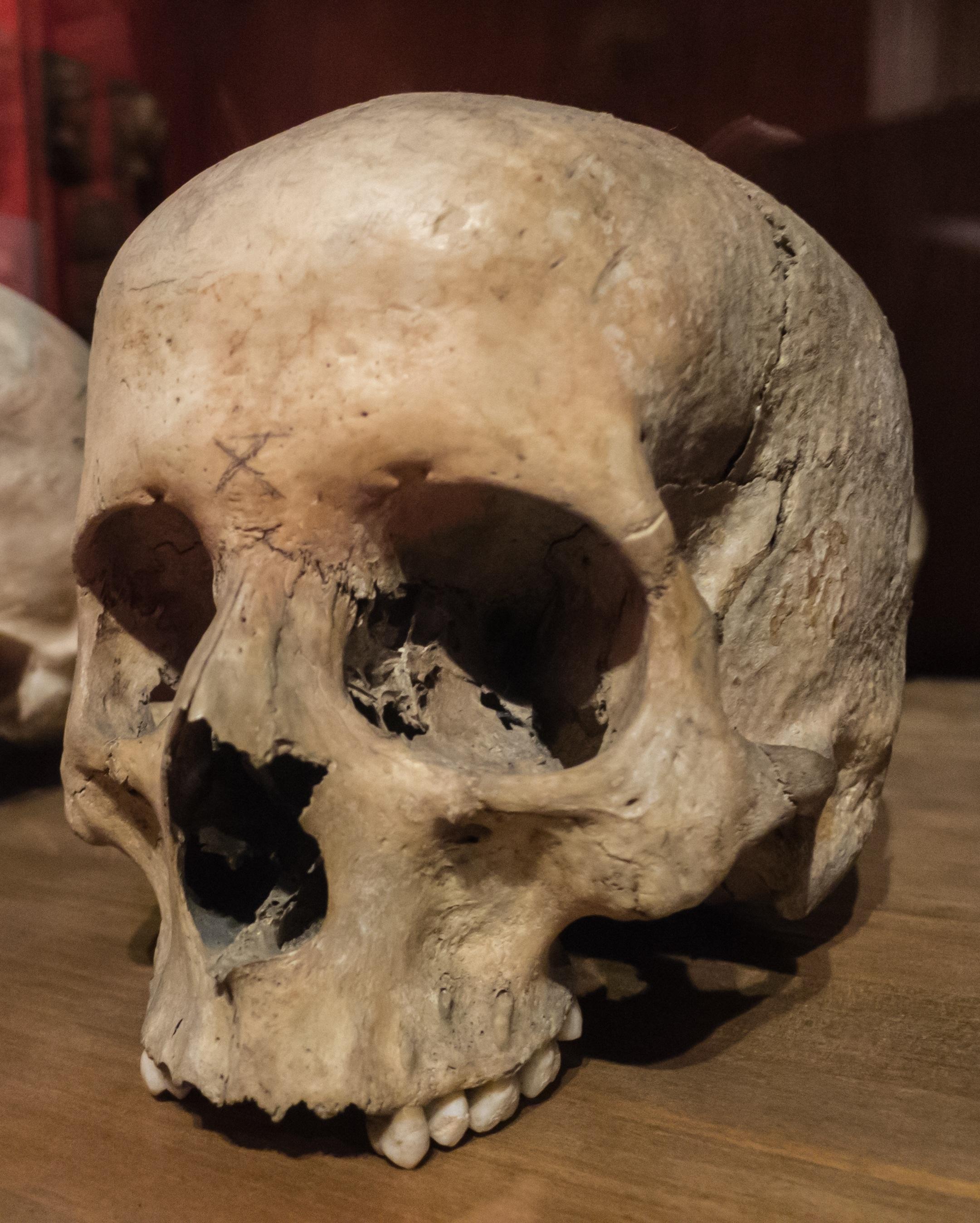 Fotos gratis : museo, muerte, cráneo, hueso, escultura ...