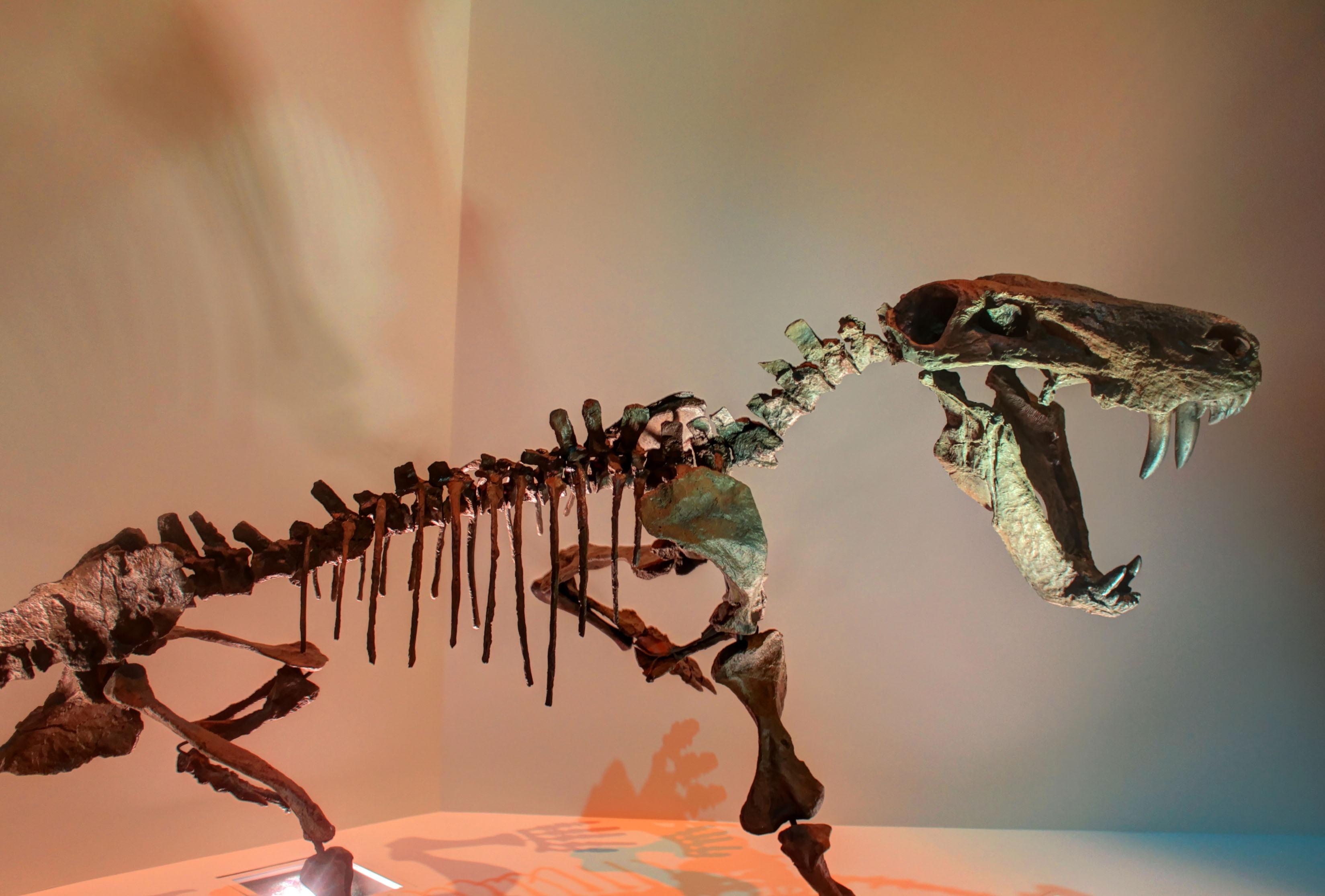 Fotos gratis : museo, insecto, fauna, invertebrado, de cerca ...