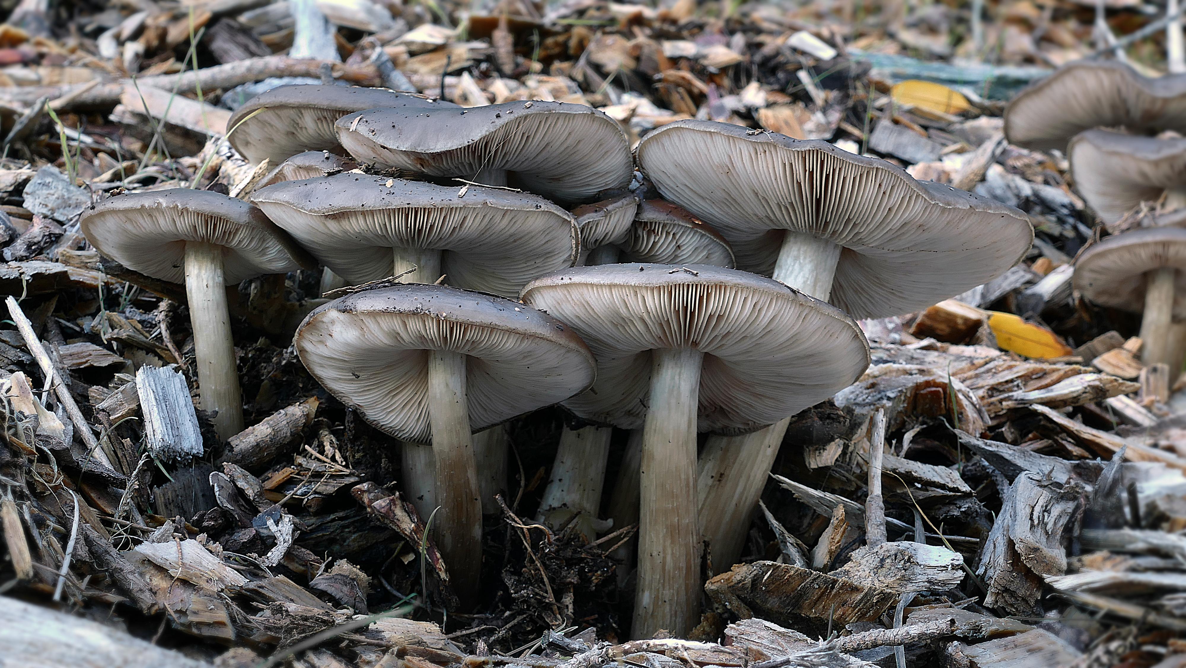 Съедобные грибы в казахстане картинки с названиями