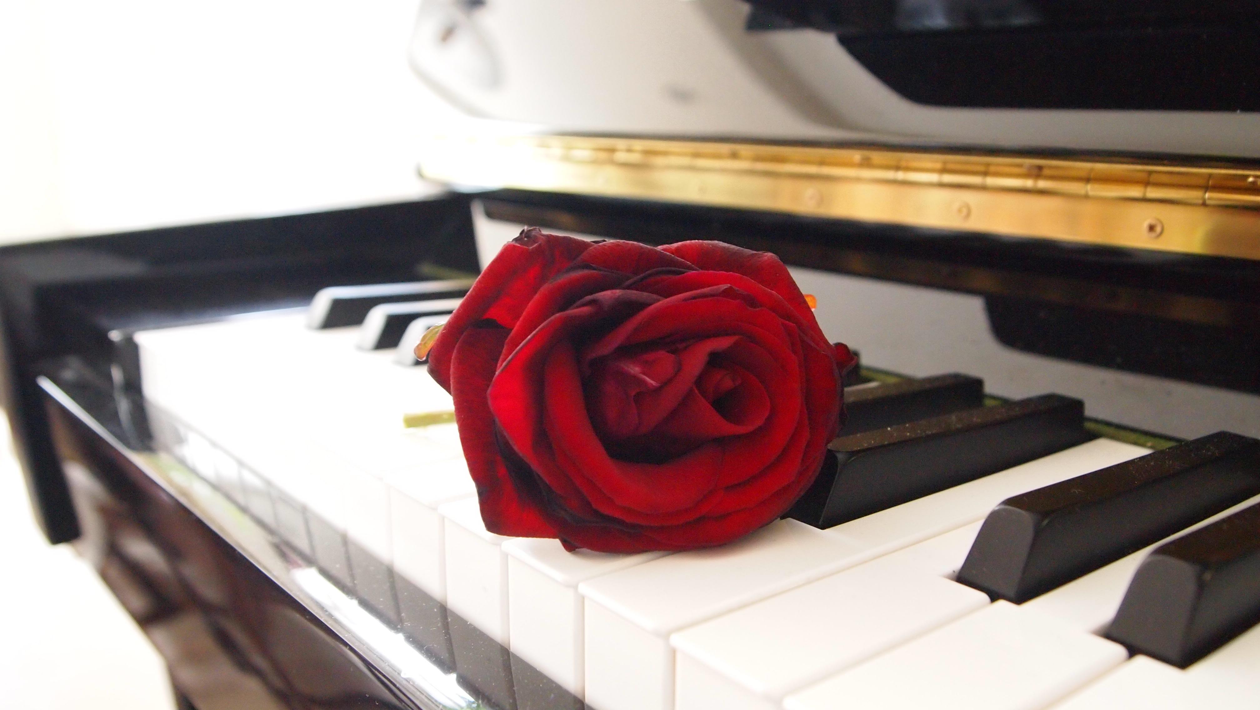 Salon Rouge Blanc Noir images gratuites : la musique, clavier, la technologie