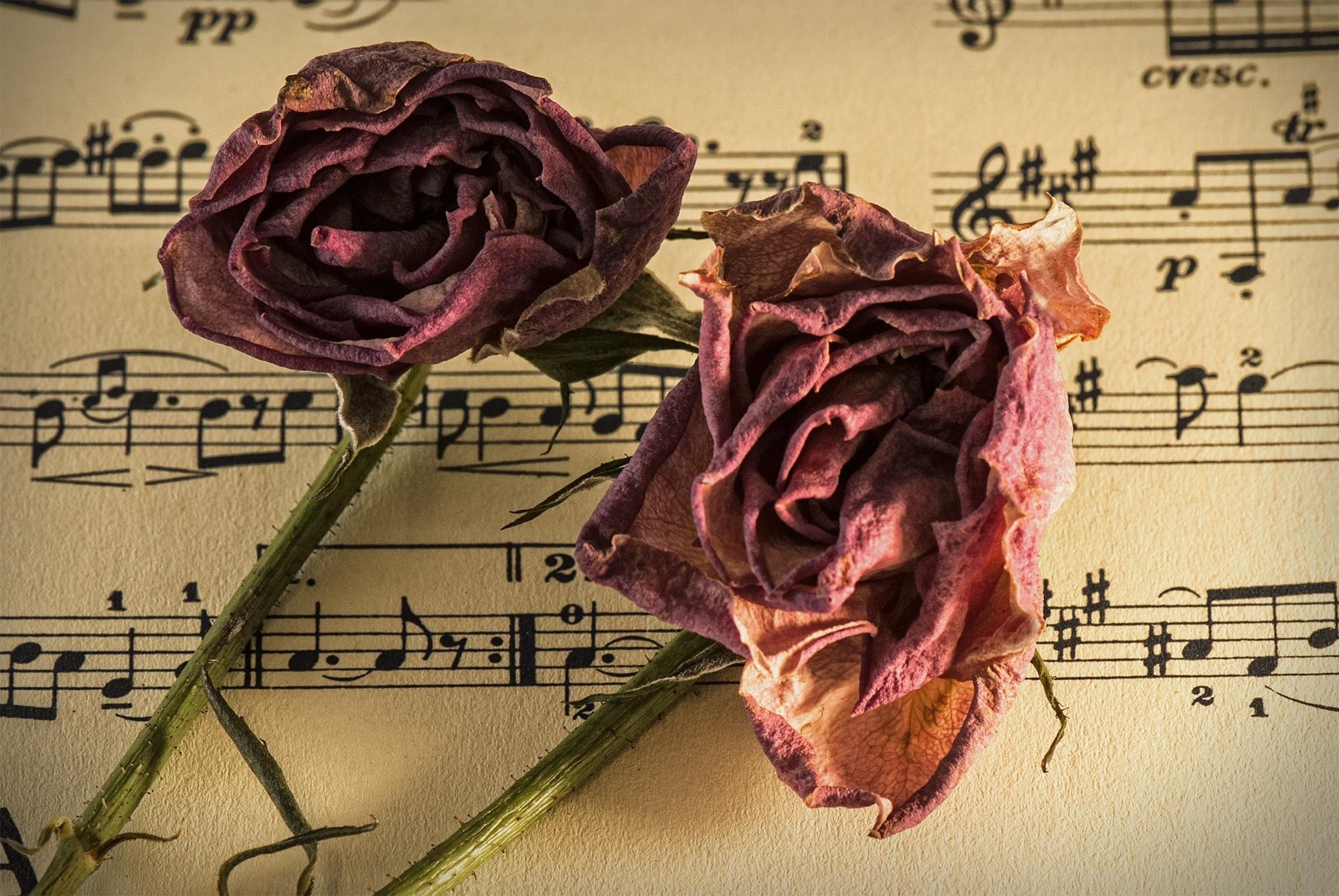 free images plant vintage antique fall petal dry