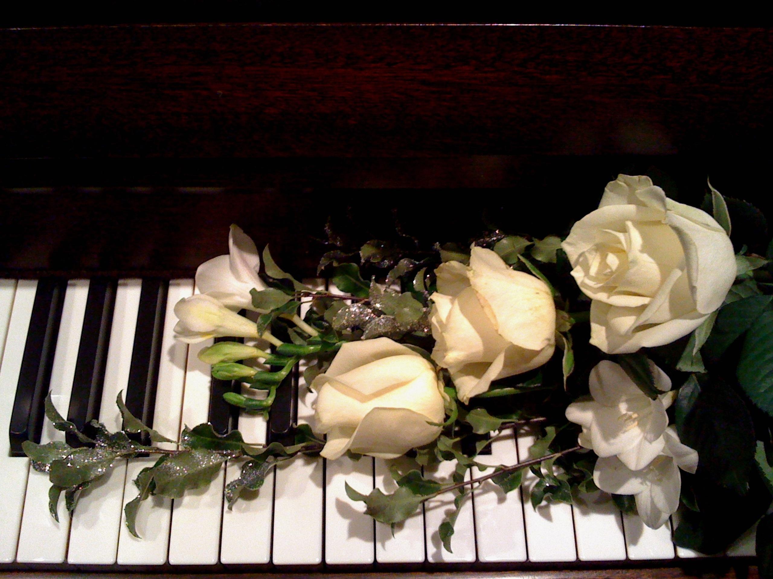 Free Images : music, white, petal, love, rose, romantic ...