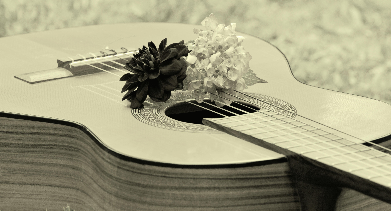 Gambar Sayap Hitam Dan Putih Satu Warna Putih Hitam Alat Musik