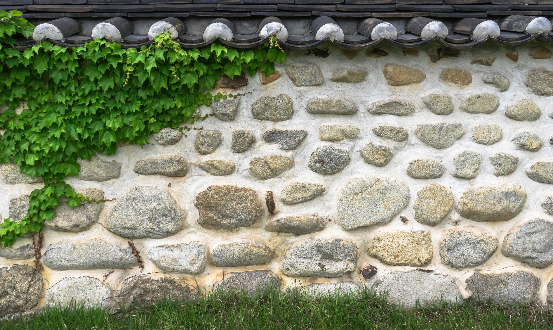 плющ на камнях картинки вечеринки