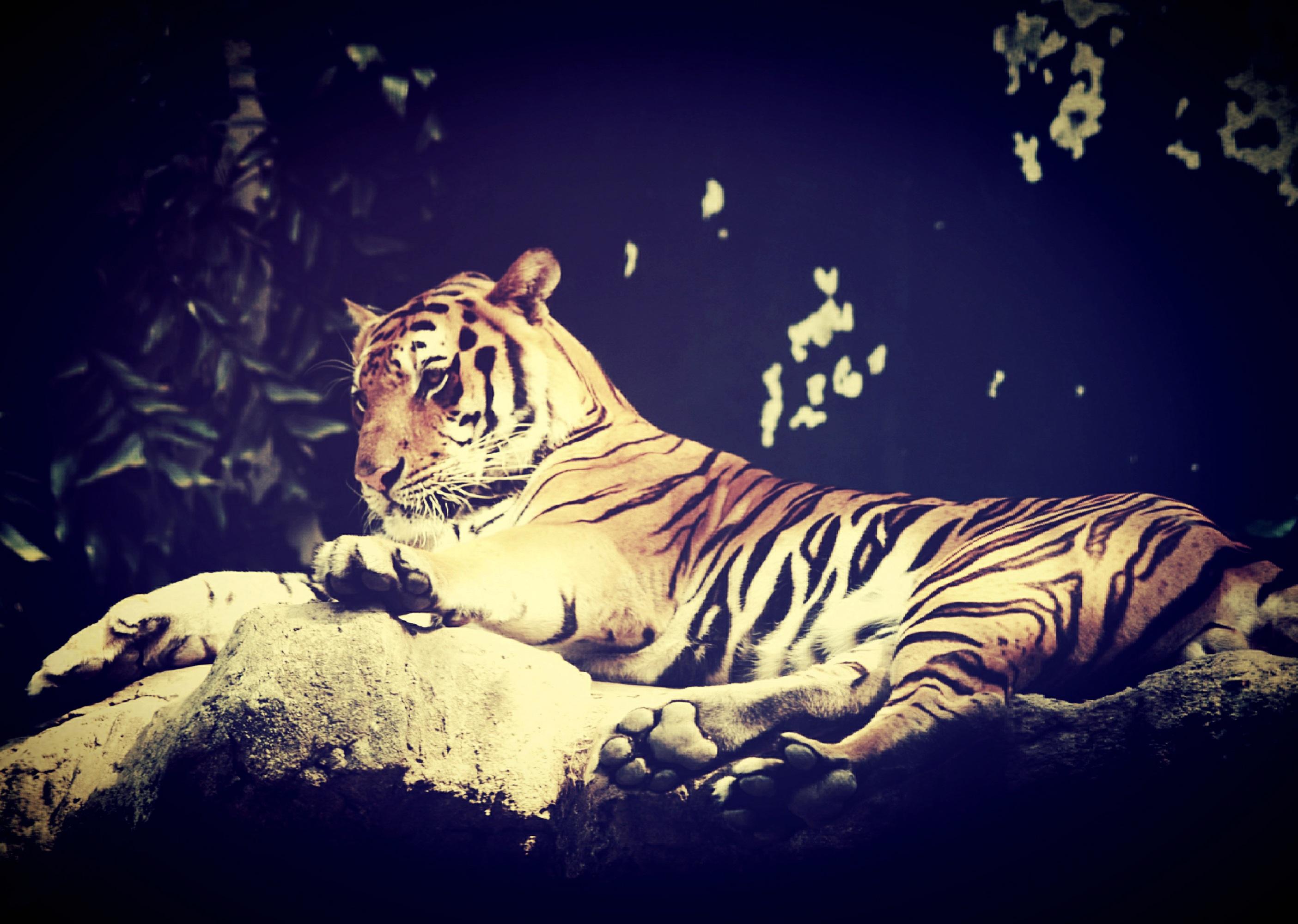 Kostenlose foto natur tier asiatisch tierwelt pelz - Tapete asiatisch ...