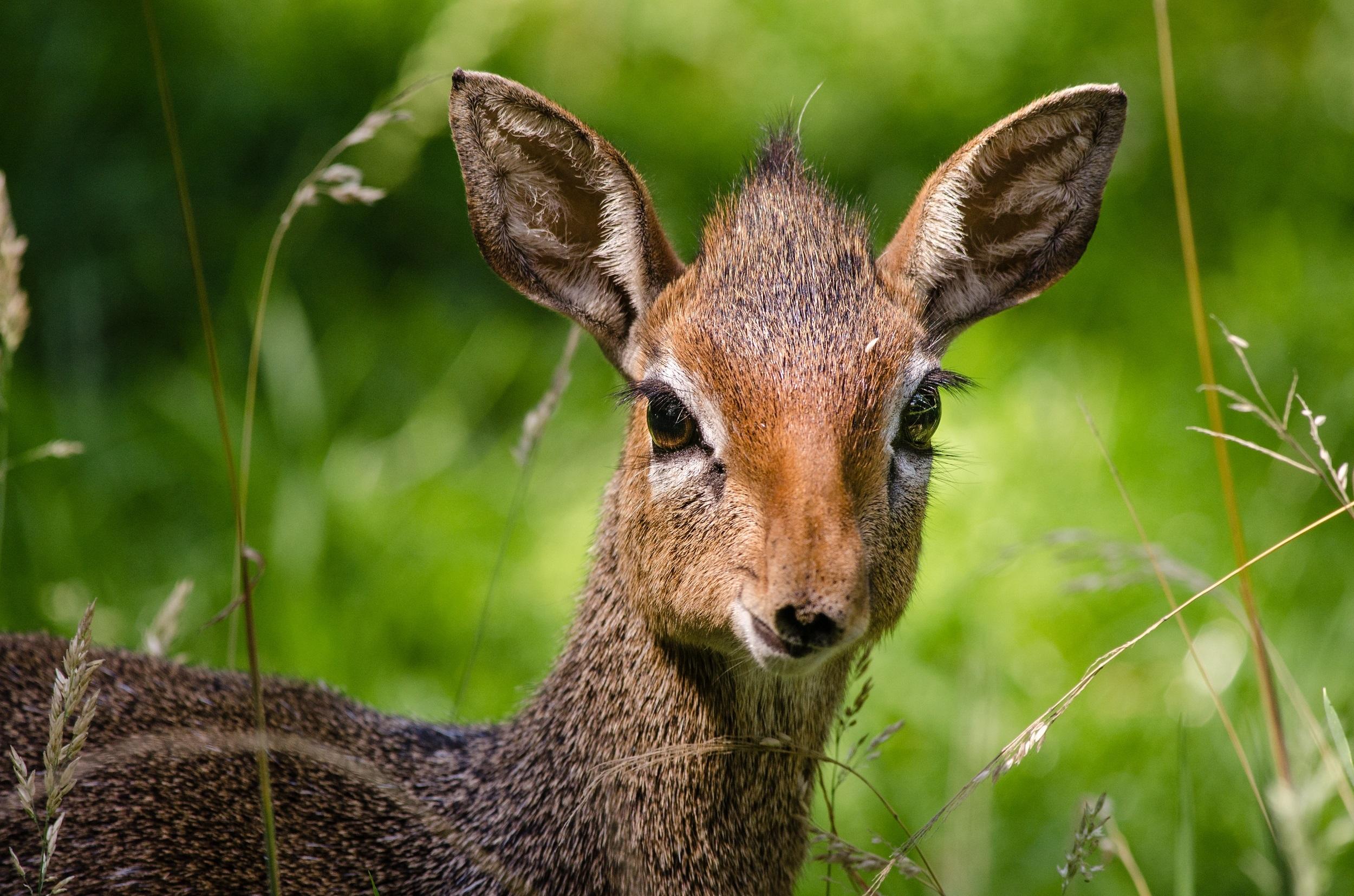 Images gratuites la nature animal en regardant - Images d animaux sauvages gratuites ...