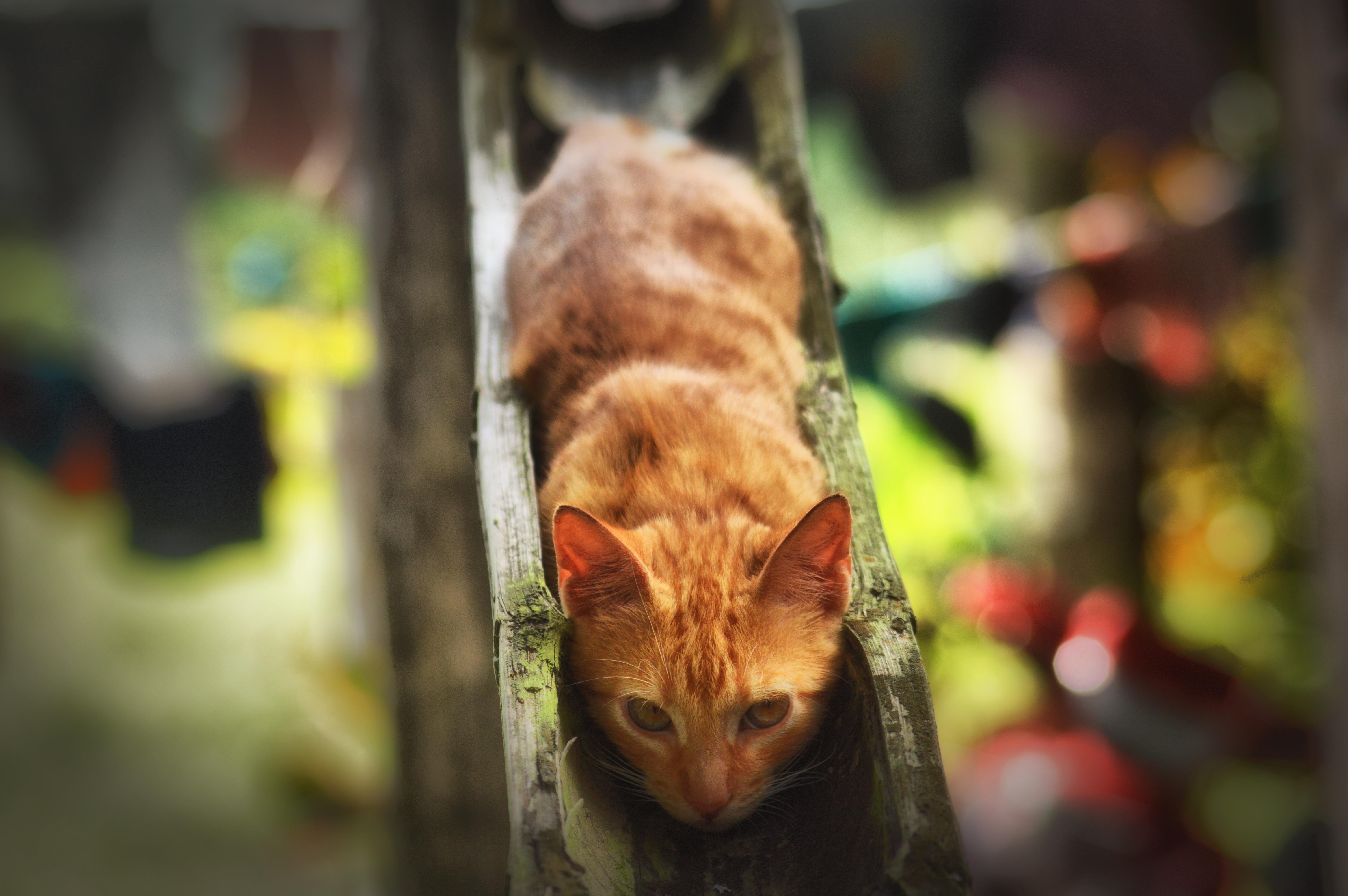Fotos gratis : naturaleza, animal, mascota, gatito, color, descanso ...