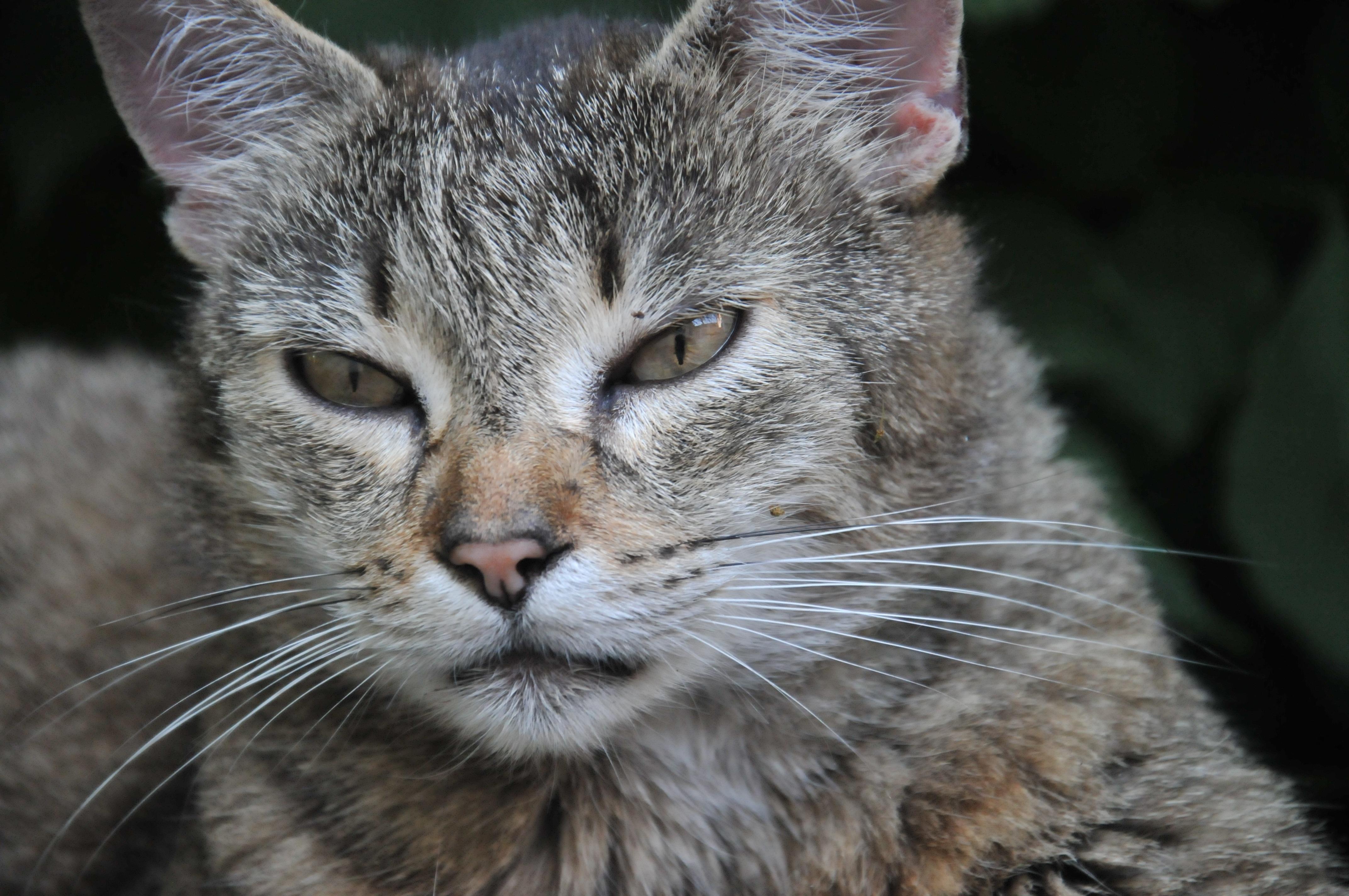 Fotos gratis naturaleza animal mascota retrato for Como ahuyentar gatos del jardin