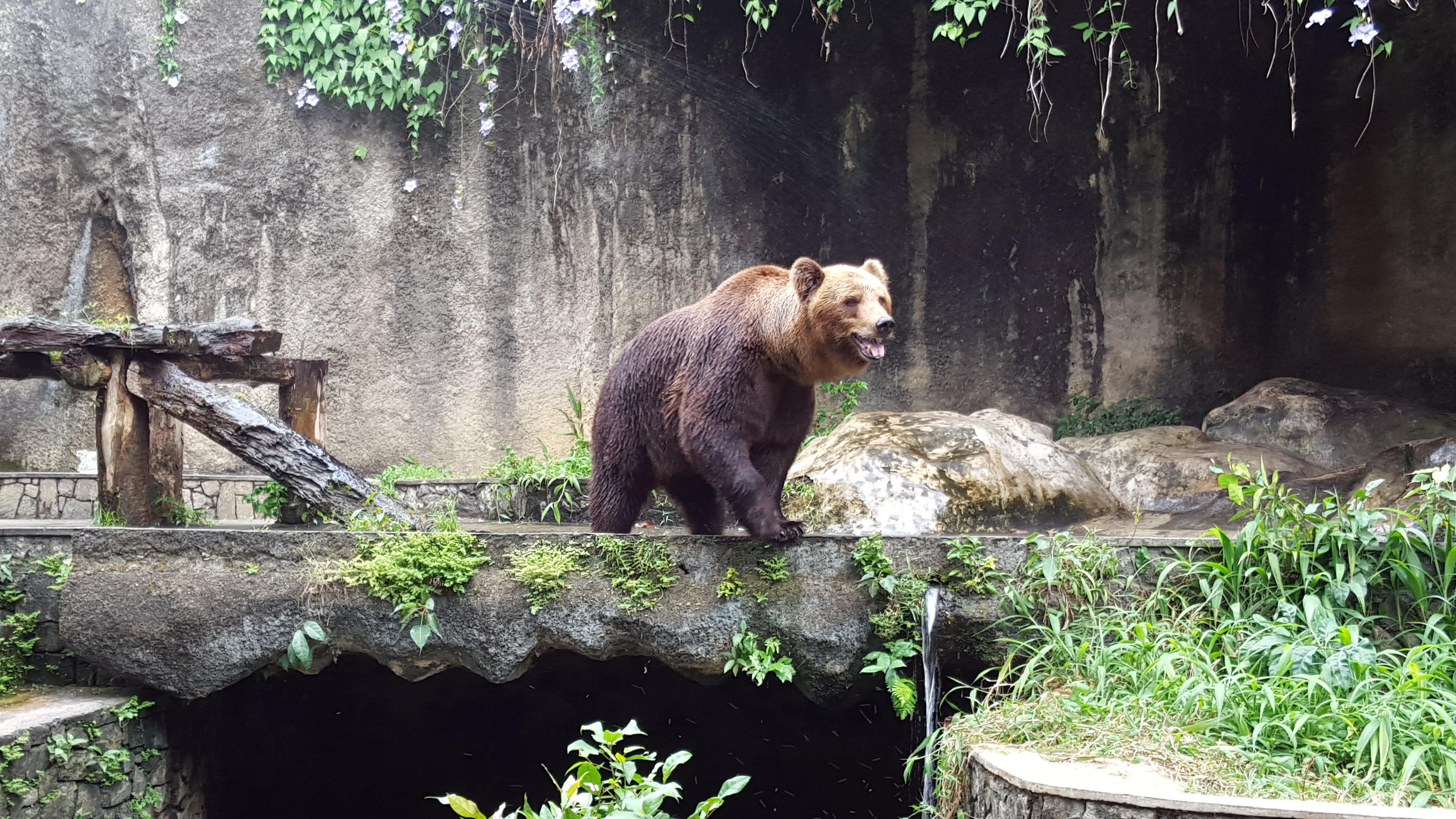 fotos gratis naturaleza animal fauna silvestre