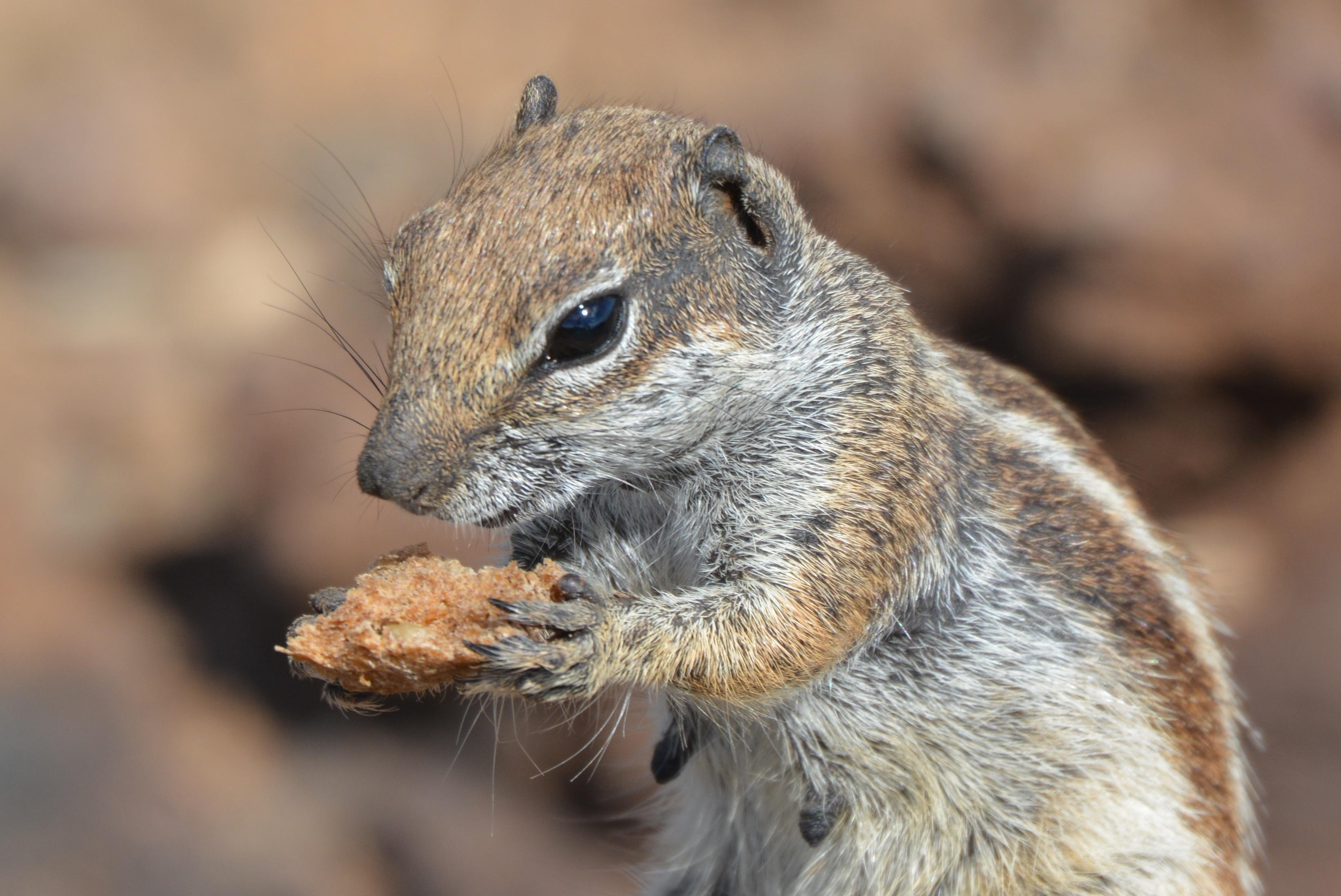 Gambar Alam Margasatwa Makanan Binatang Menyusui Hewan