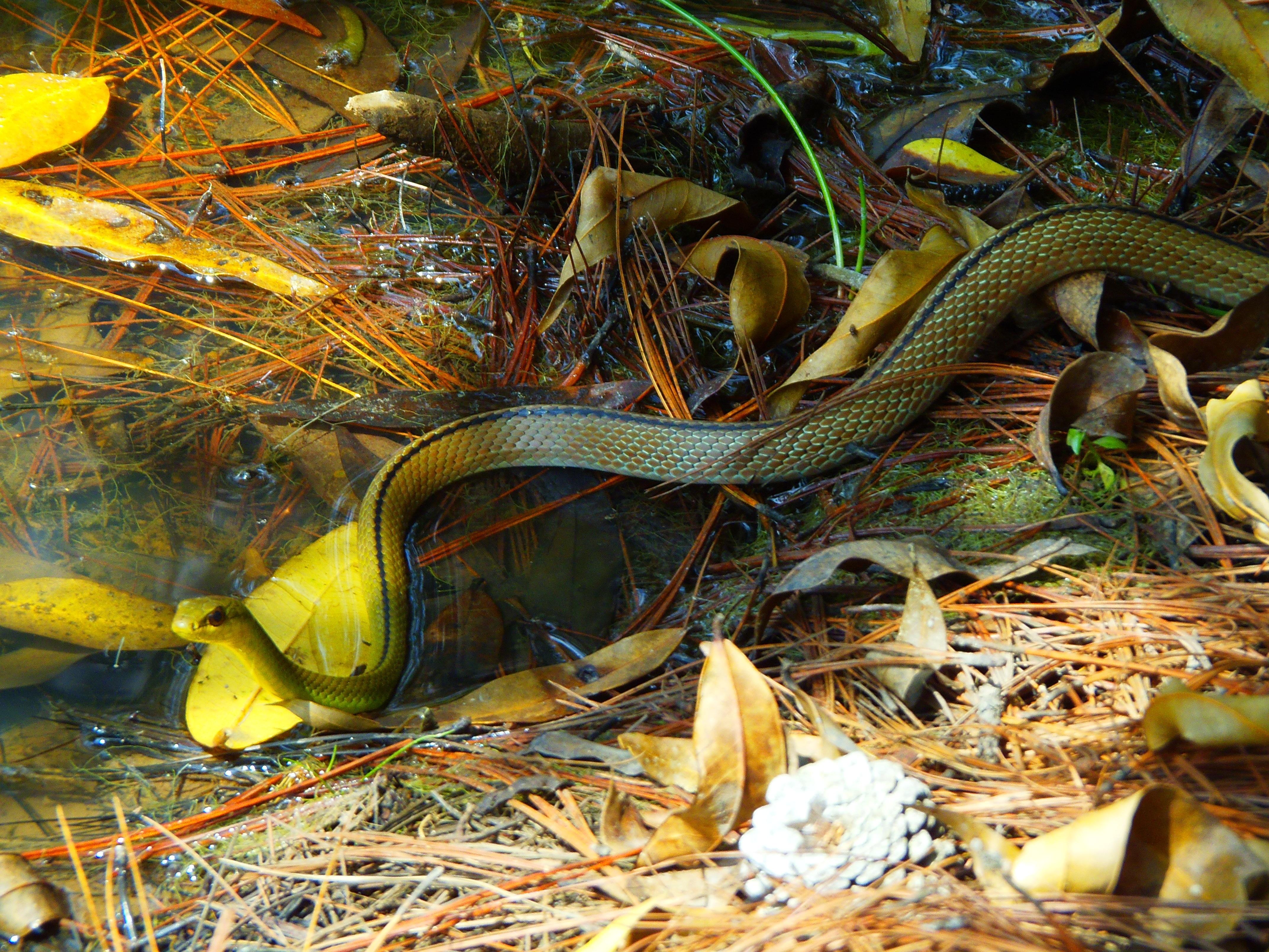 Free Images : nature, animal, wildlife, reptile, fauna, animals ...