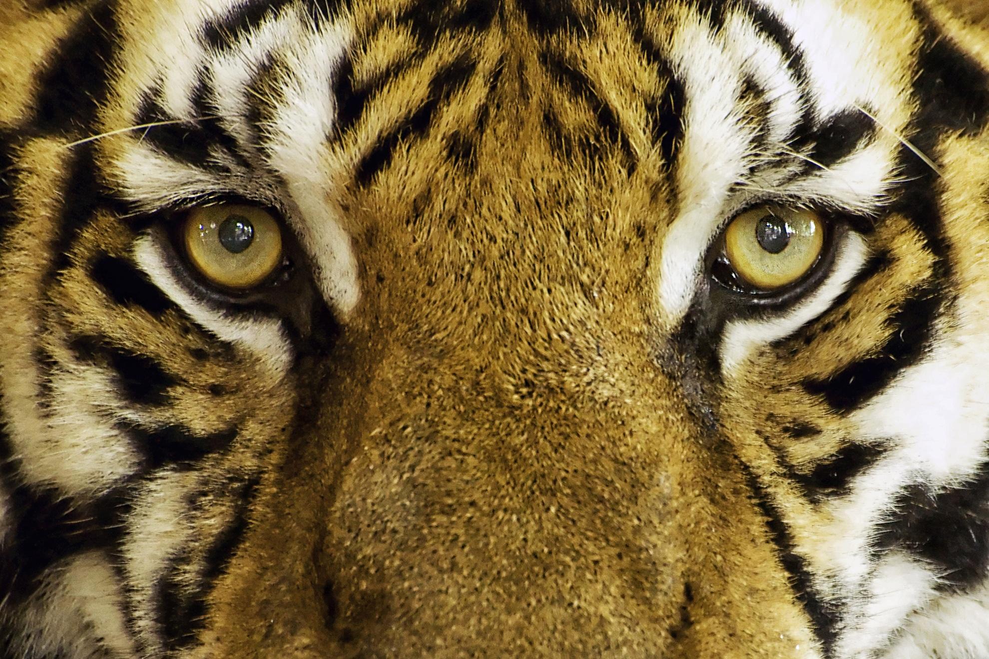 Darmowe Zdjęcia Natura Zwierzę Dzikiej Przyrody Dziki Ogród