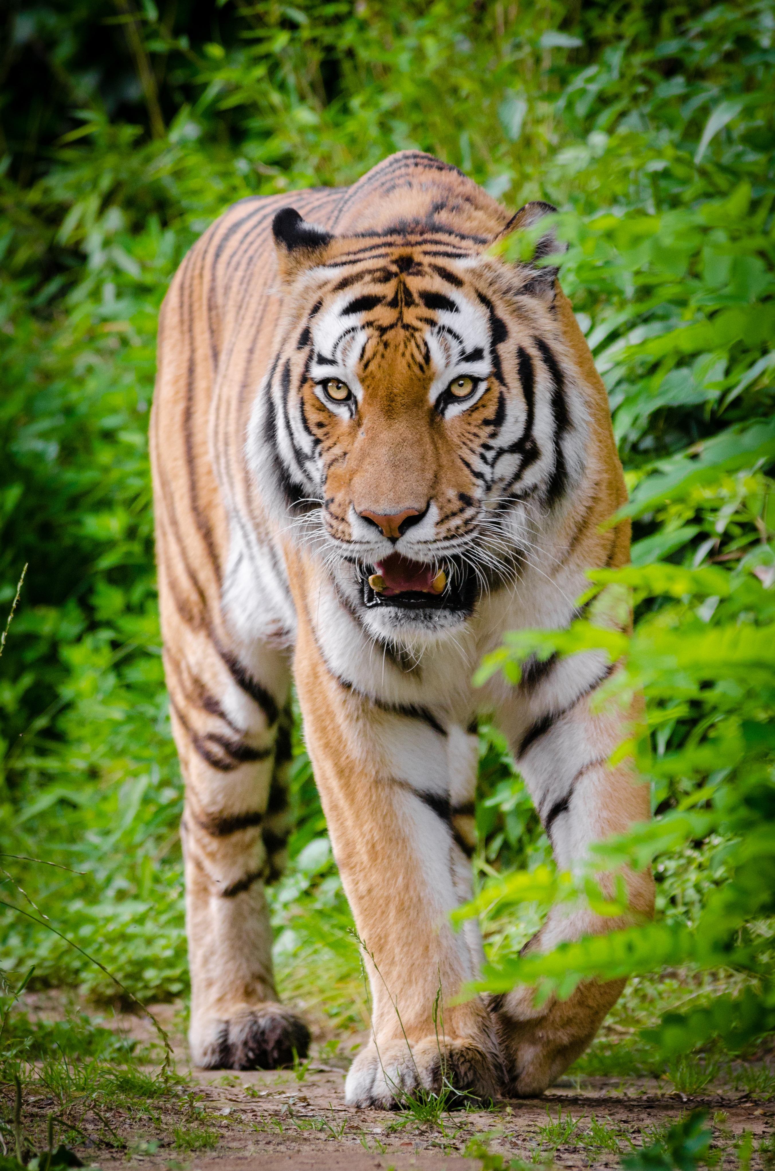 42 Gambar Binatang Flora Dan Fauna HD Terbaru