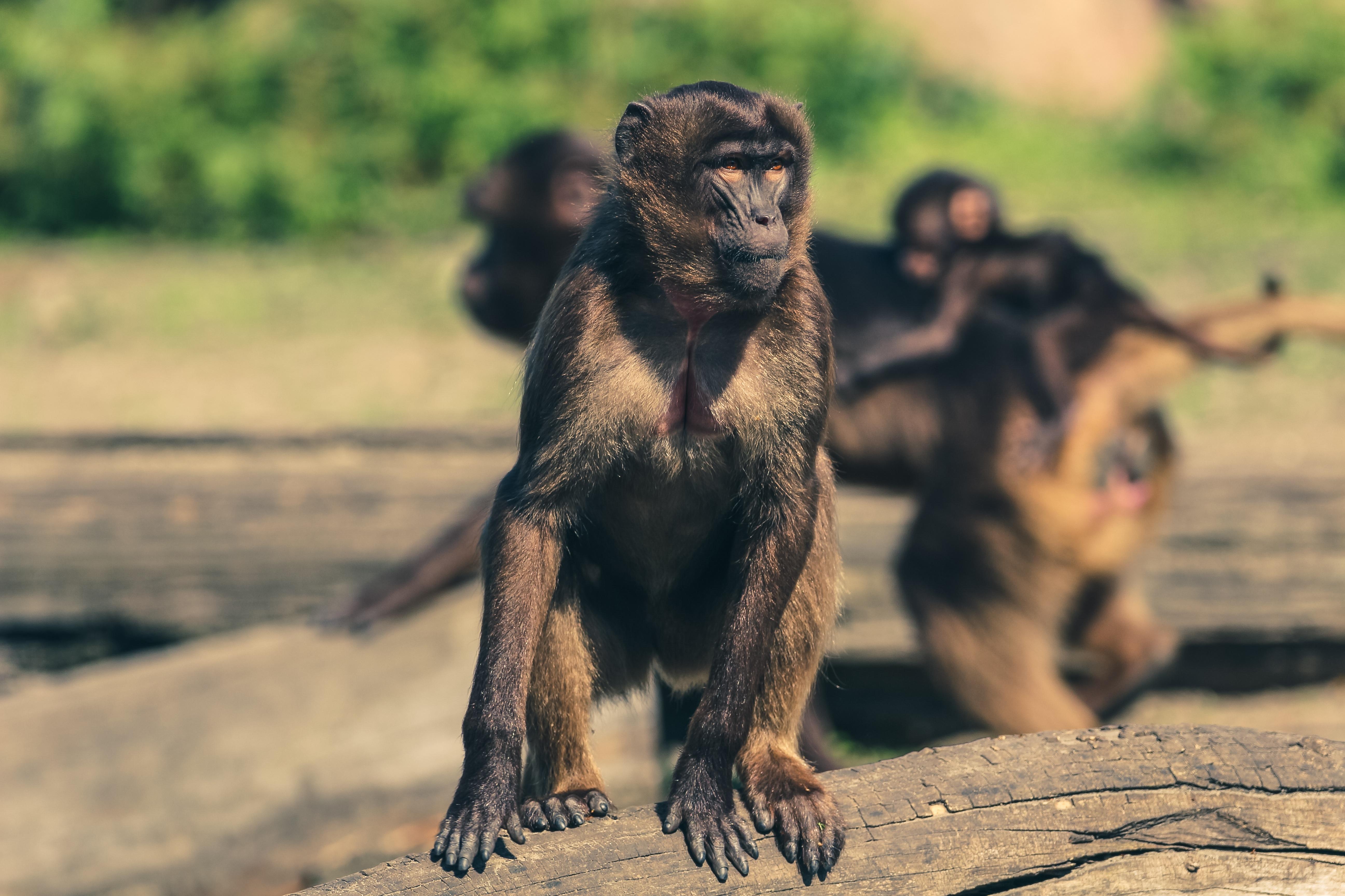 Monkey drug trials video motorcycle