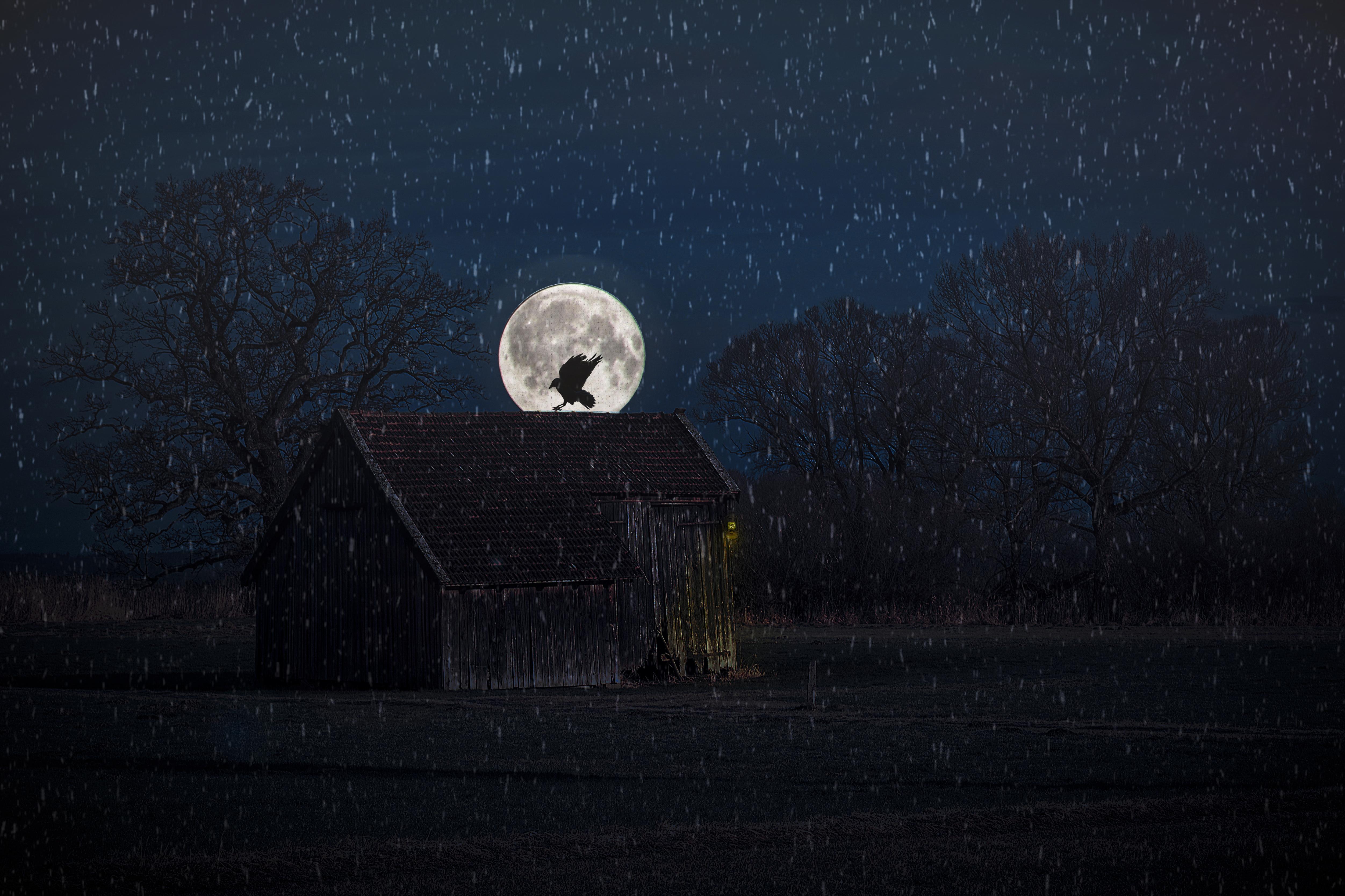 ночь дождь луна картинки дерева шкатулка