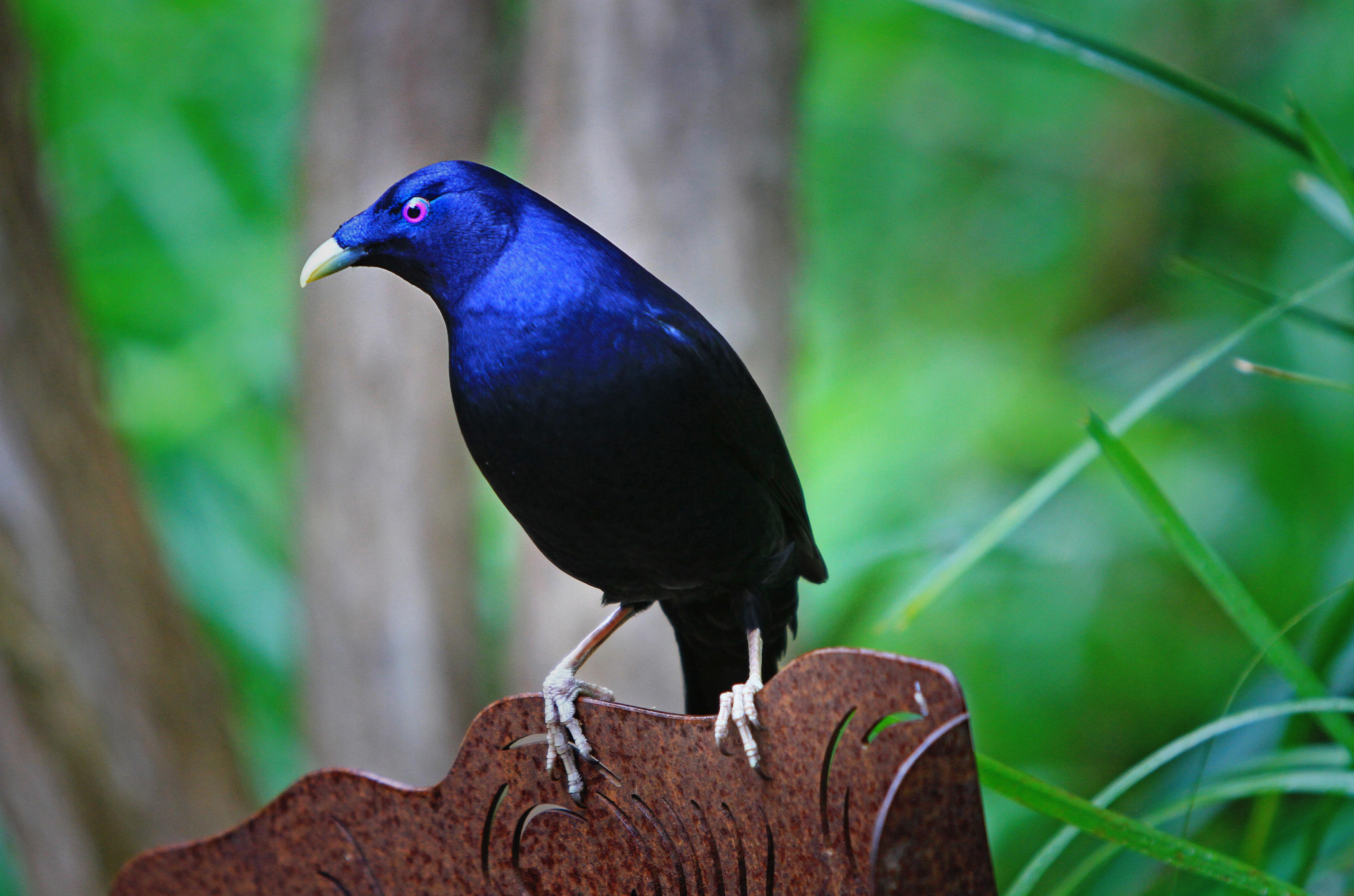 Banco De Imagens : Natureza, Pássaro, Sozinho, Sombrio