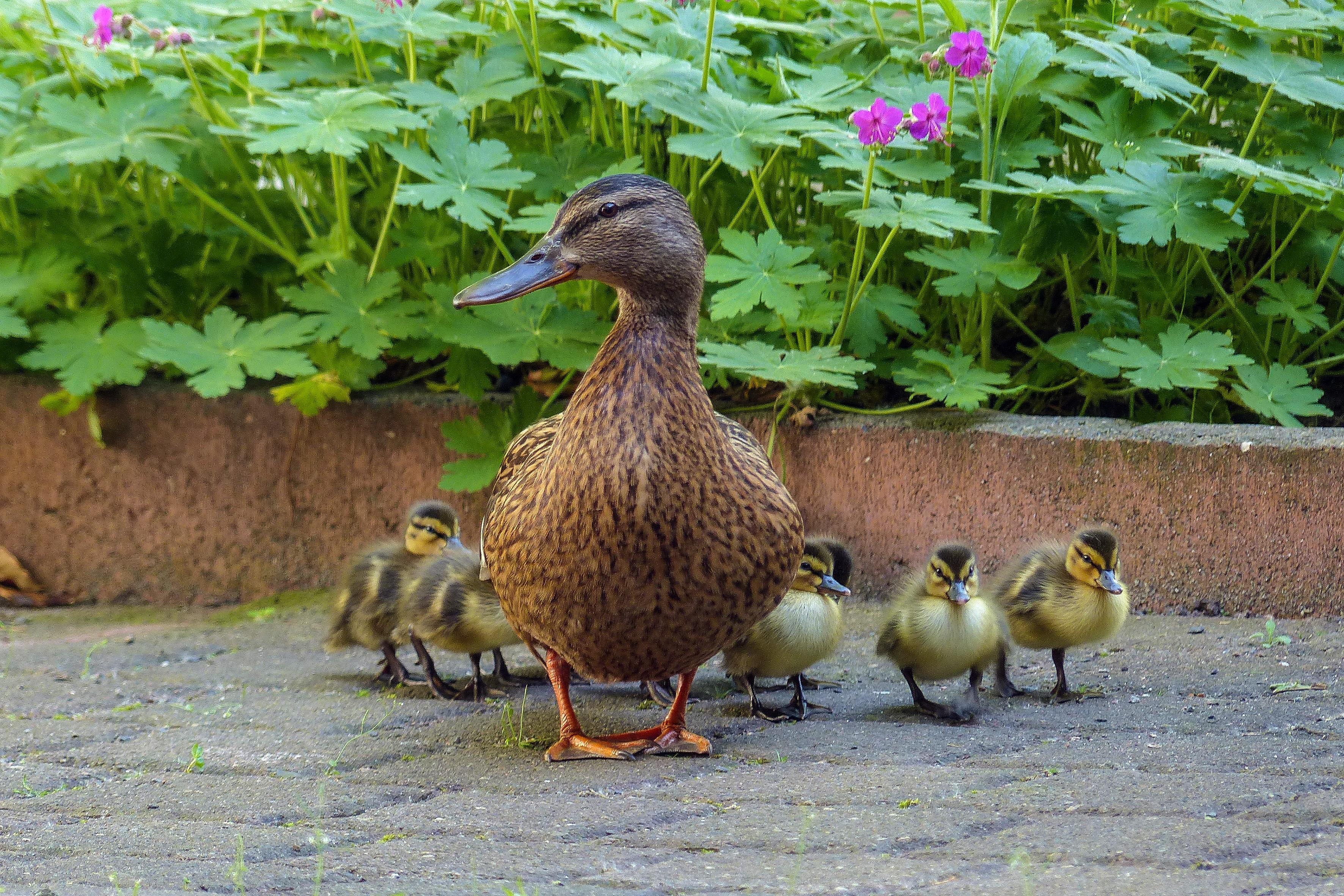 Free Images : nature, animal, wildlife, beak, fowl, fauna ...