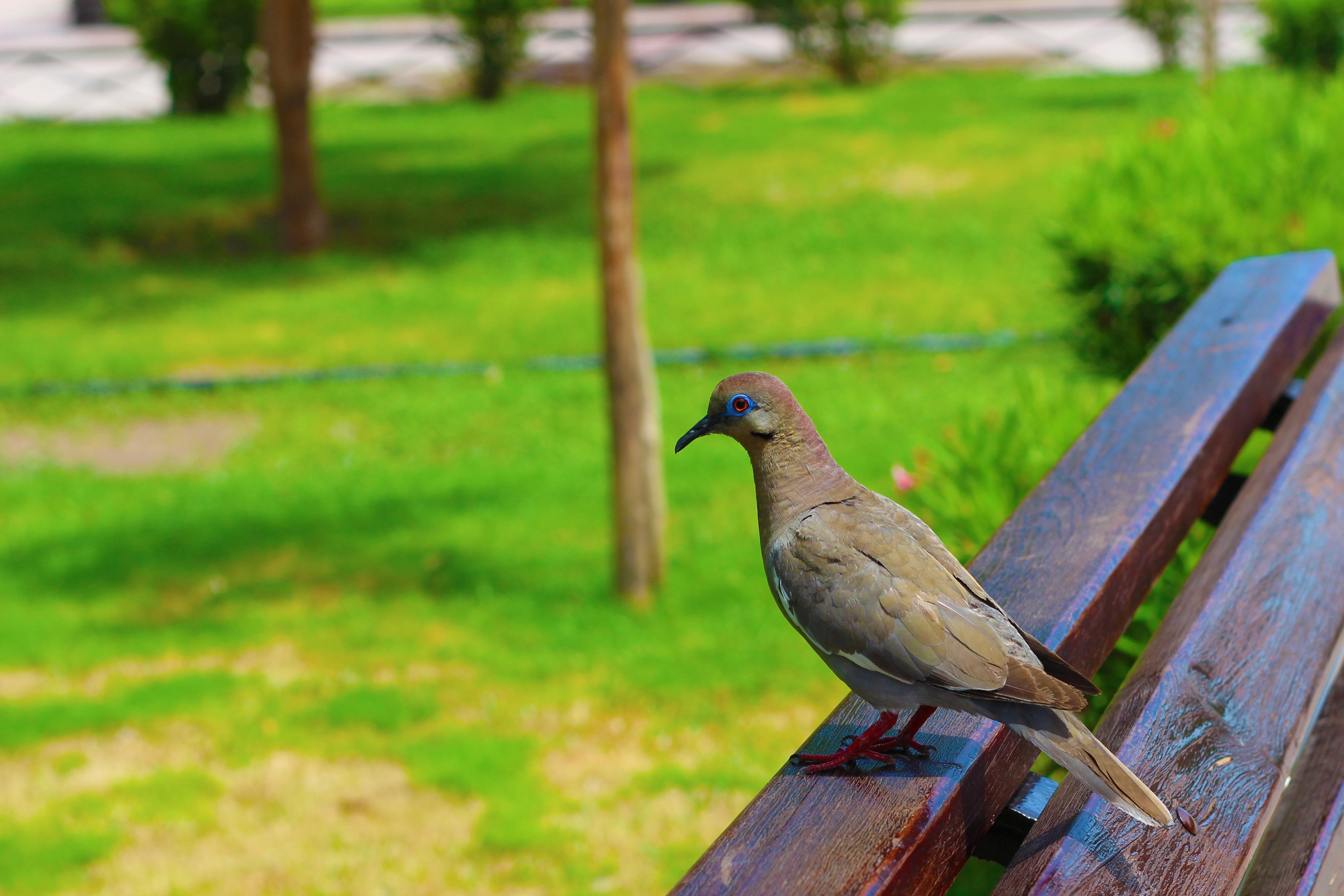 1050+ Gambar Binatang Burung Kecil HD