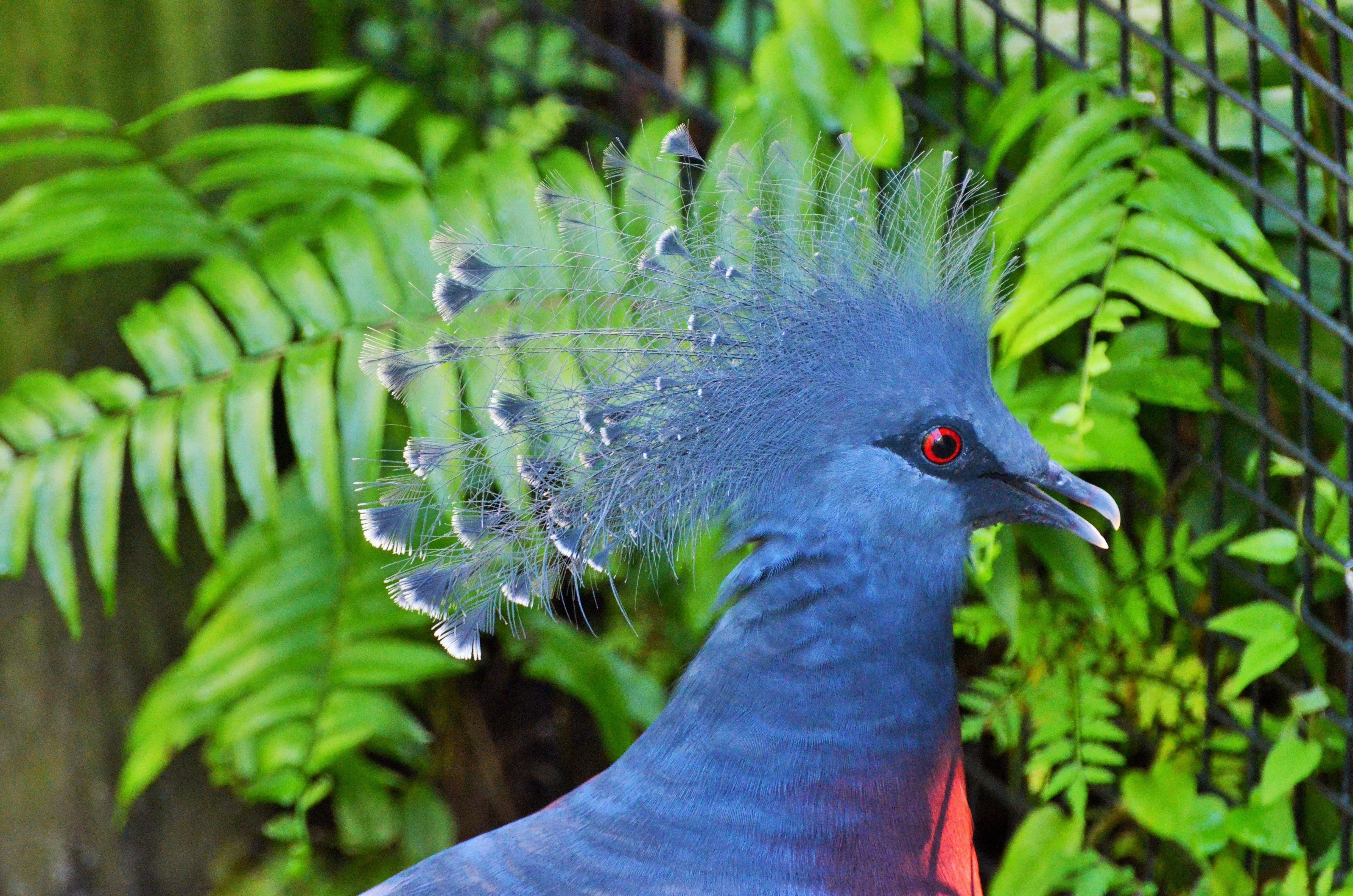 συλλογή από μεγάλο πουλί