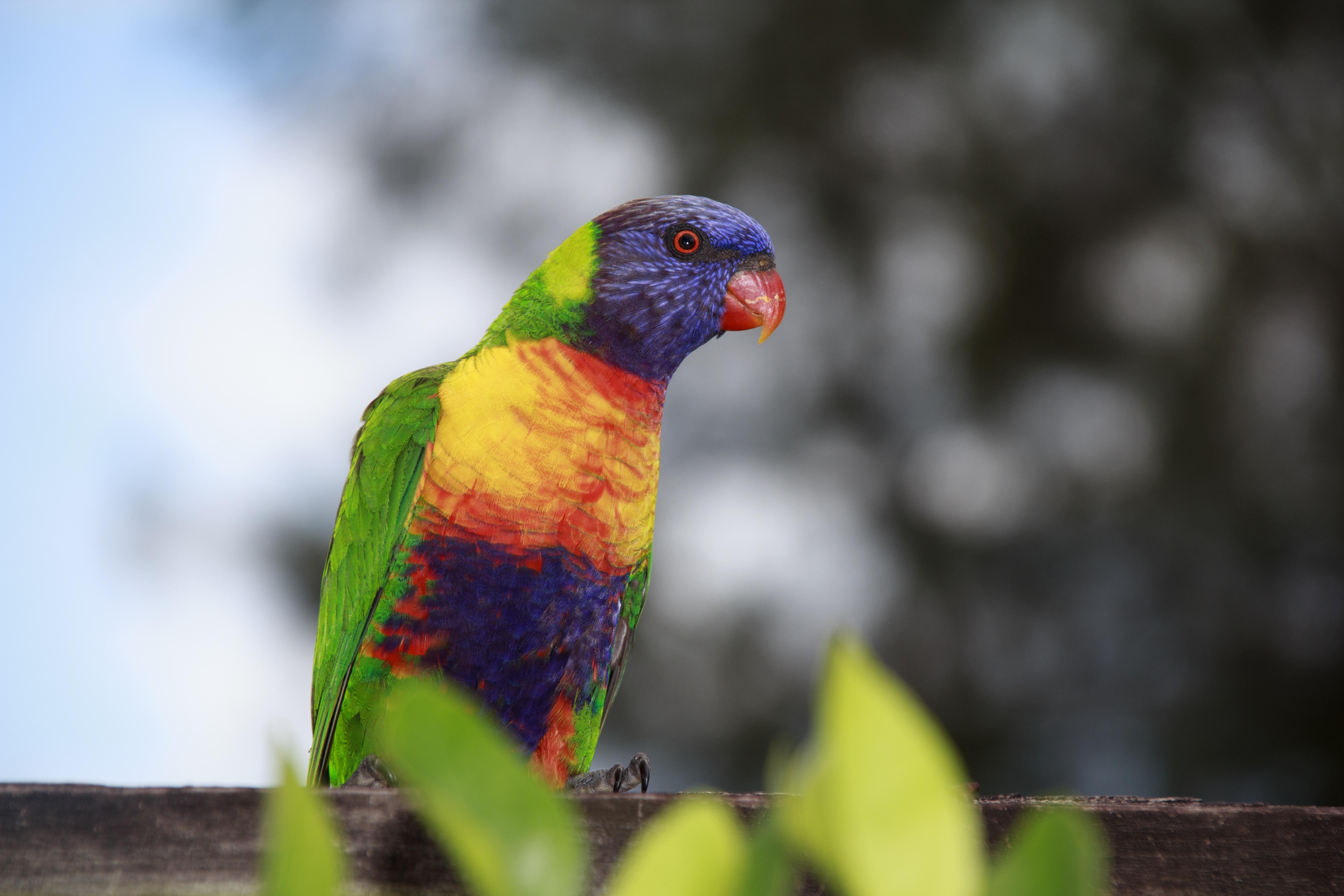 Images gratuites la nature oiseau animal faune vert for Oiseau noir bec jaune