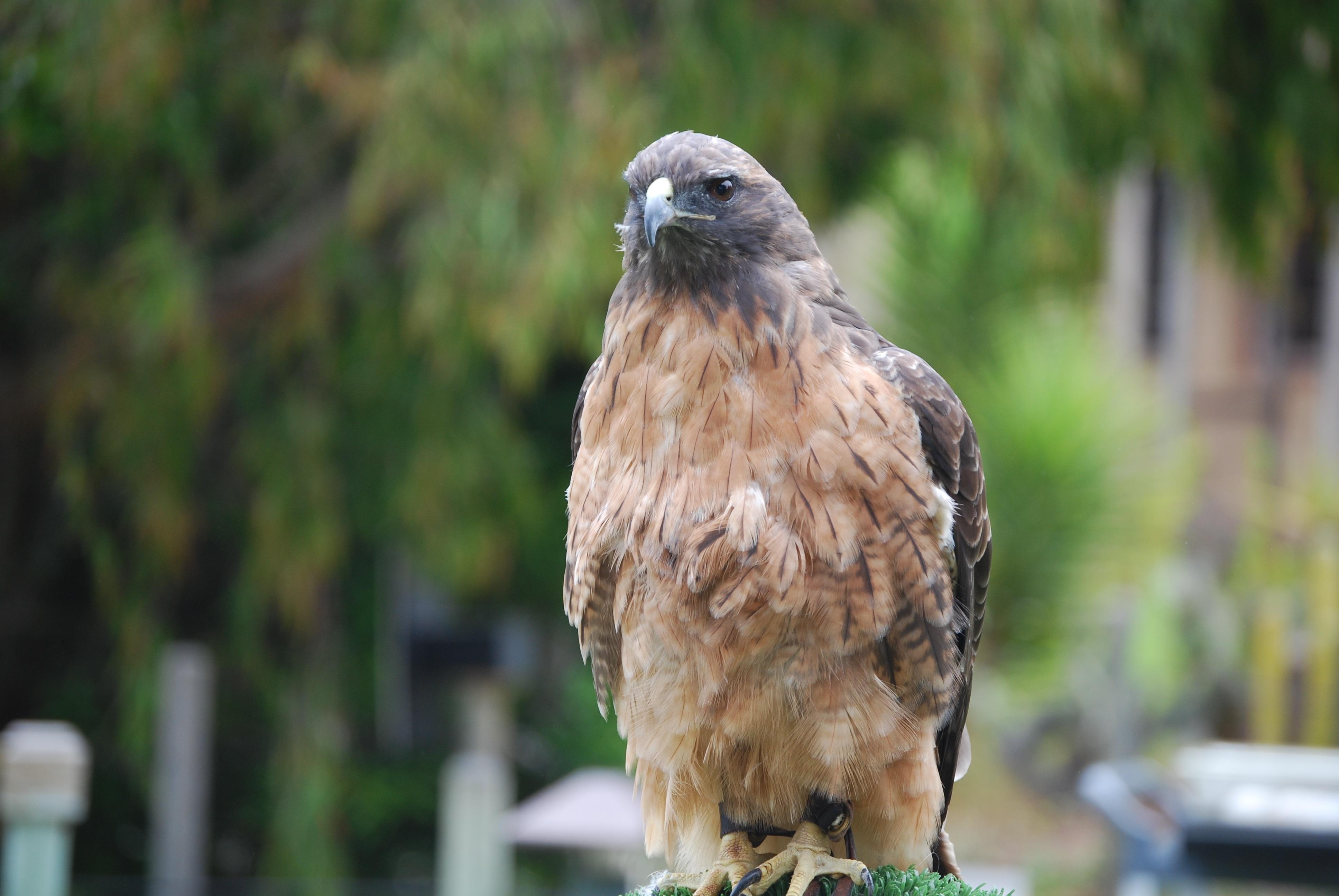 Images gratuites la nature animal faune sauvage le - Images d animaux sauvages gratuites ...