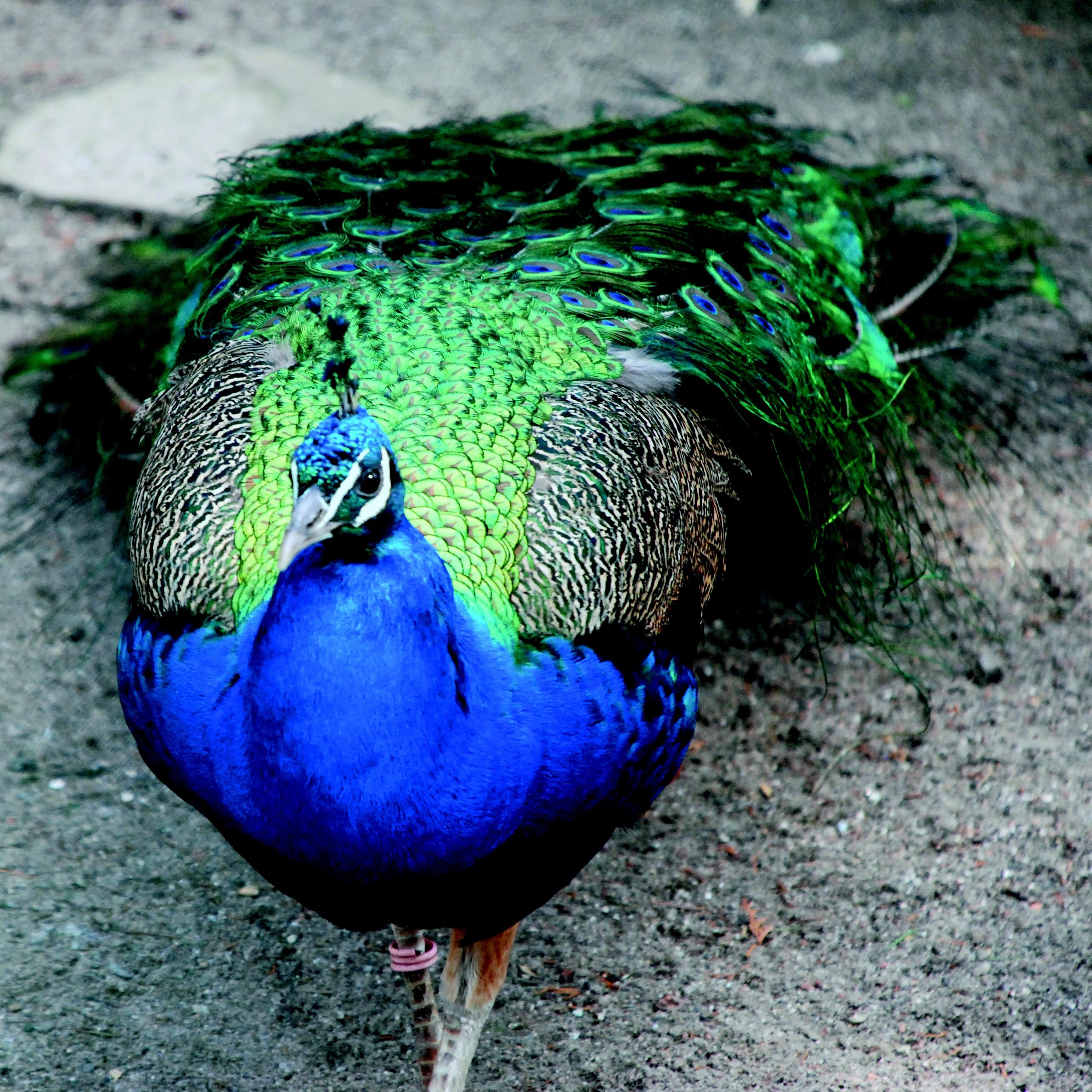 Banco De Imagens Natureza Pássaro Animal Animais