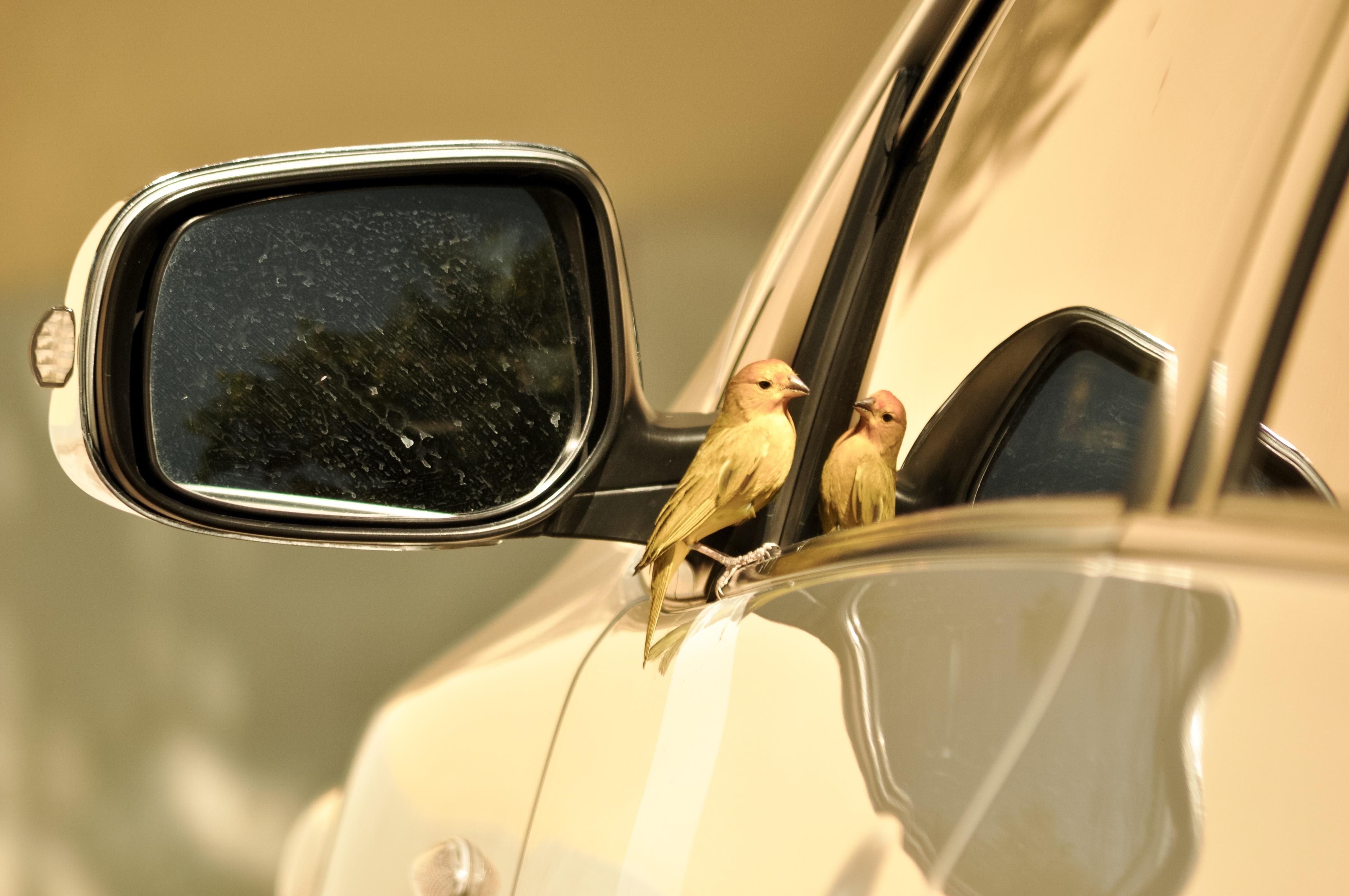 Images gratuites la nature oiseau voiture roue for Fenetre voiture