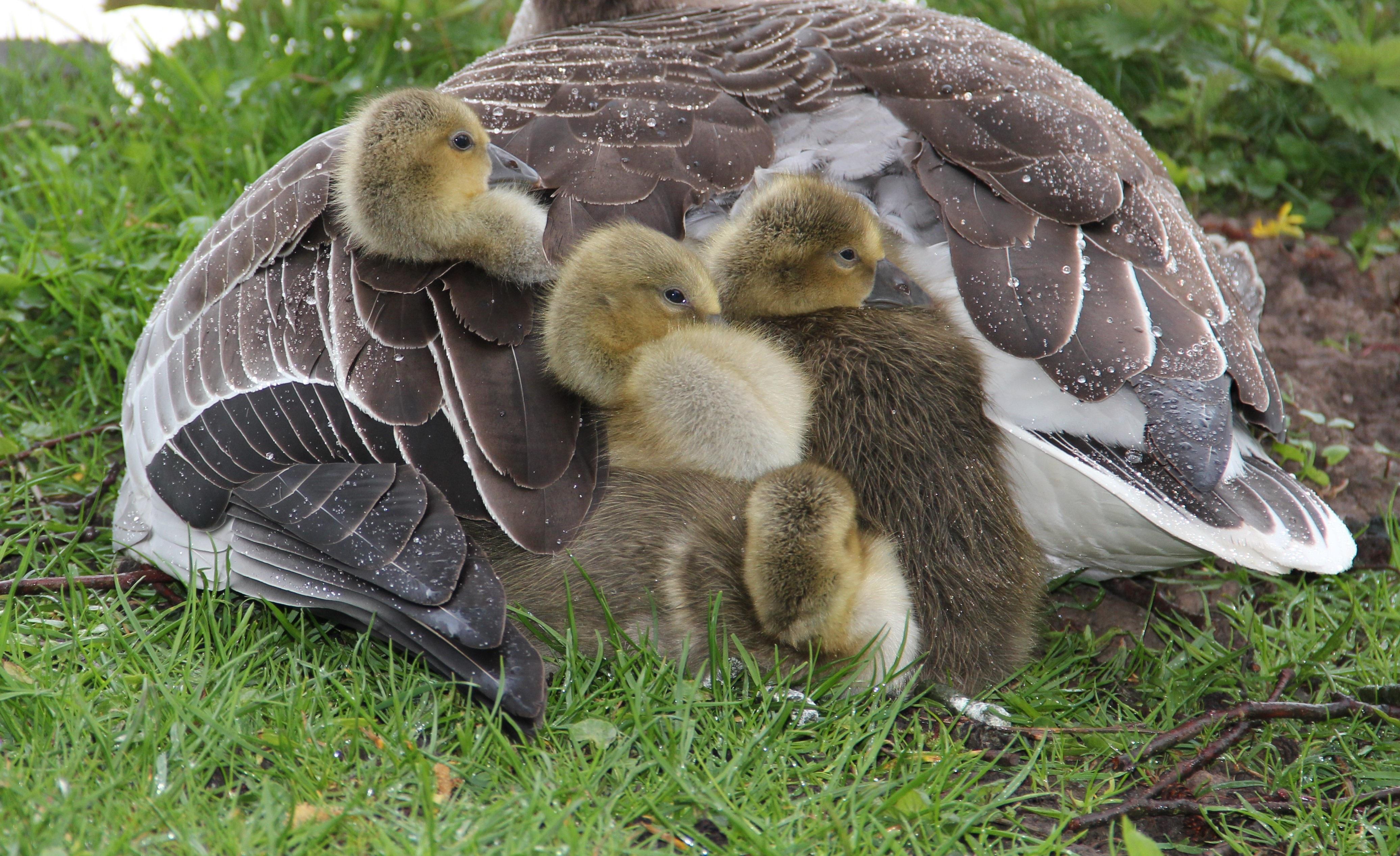 free images nature cute pond spring beak small park close