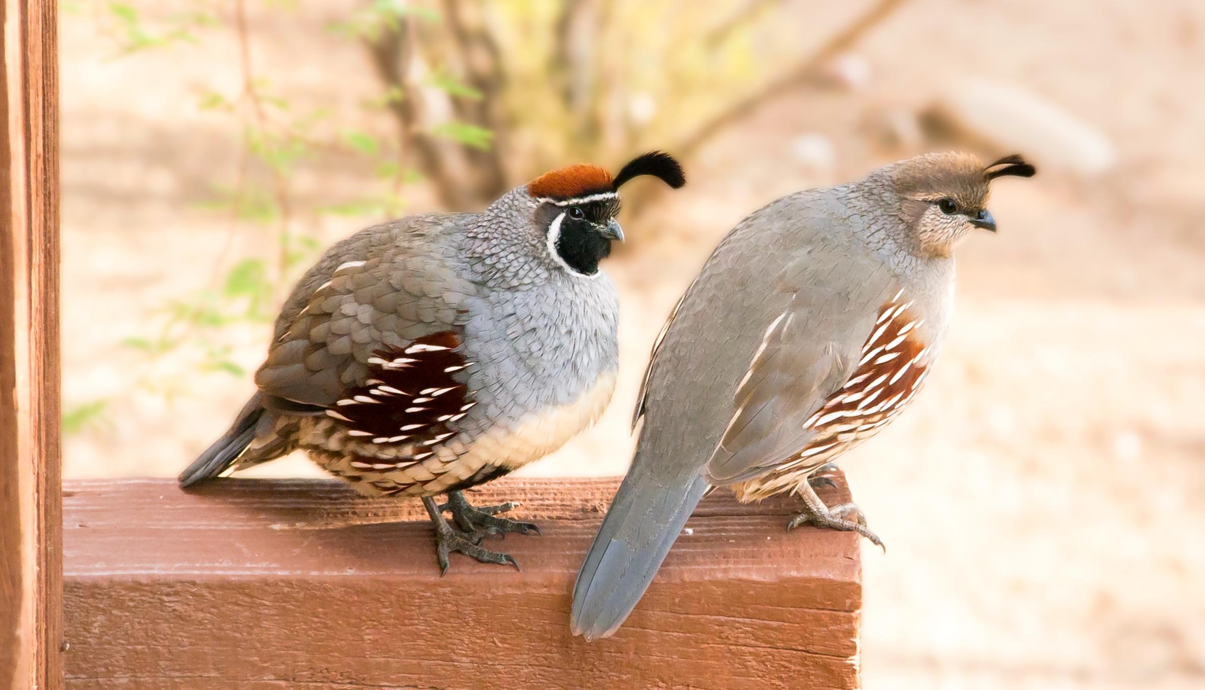 free images : nature, cute, wildlife, beak, couple, two, fauna