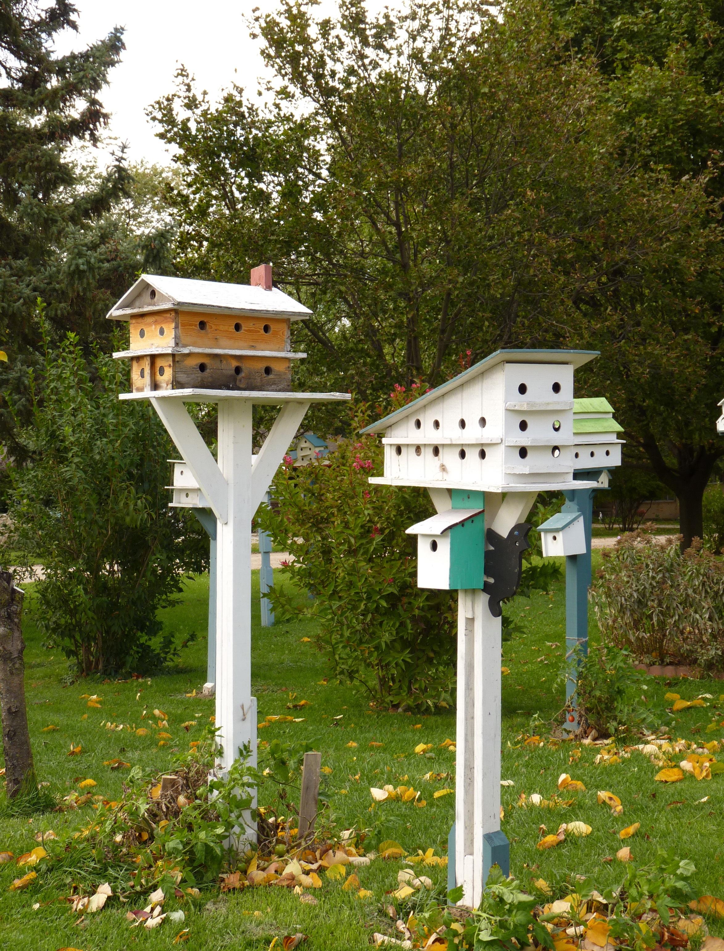 domain photo pictures free view garden en image feeder bird public stock