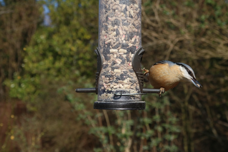 garden miracle reviews gro product feeder com walmart